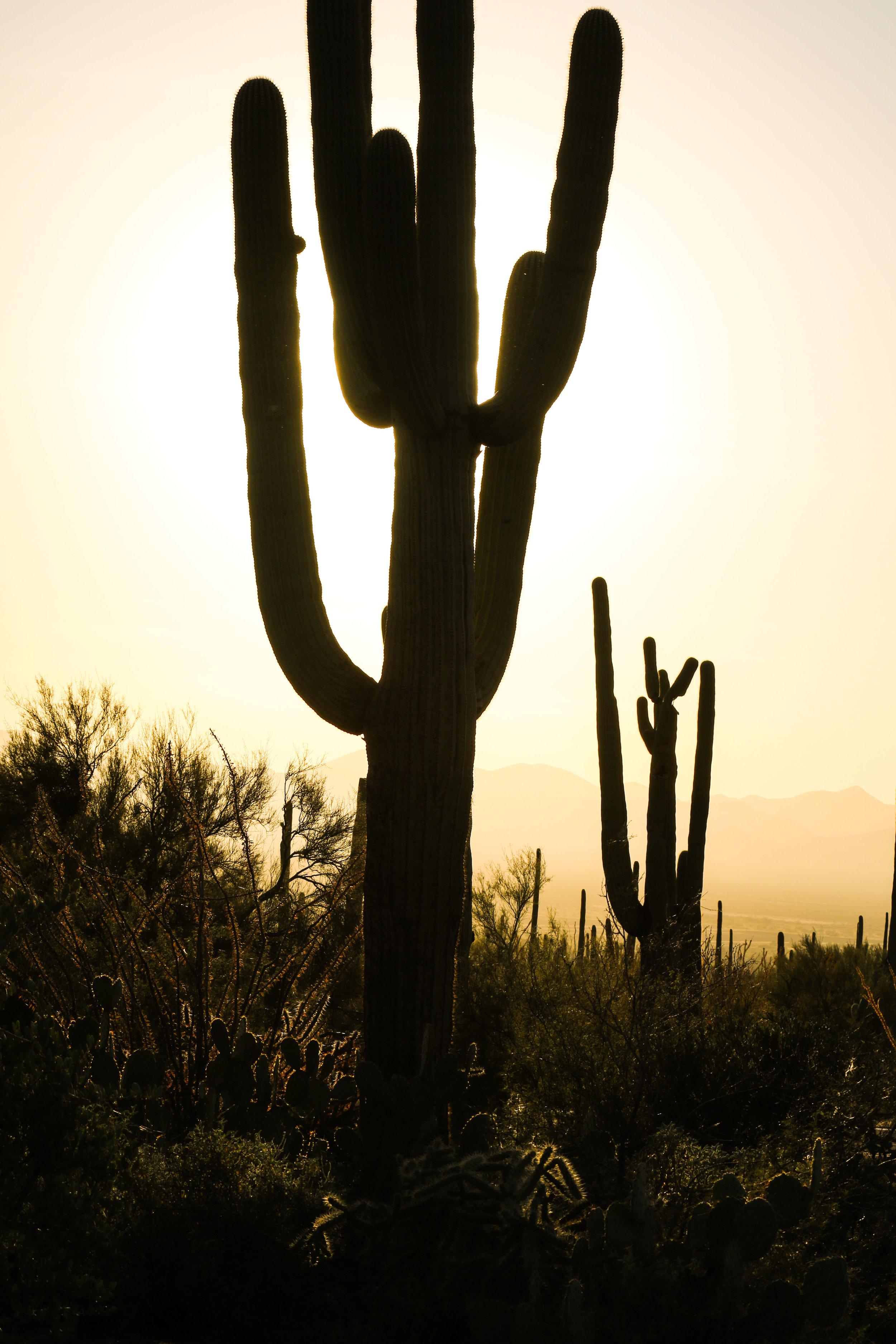 2018_Saguaro-15.jpg