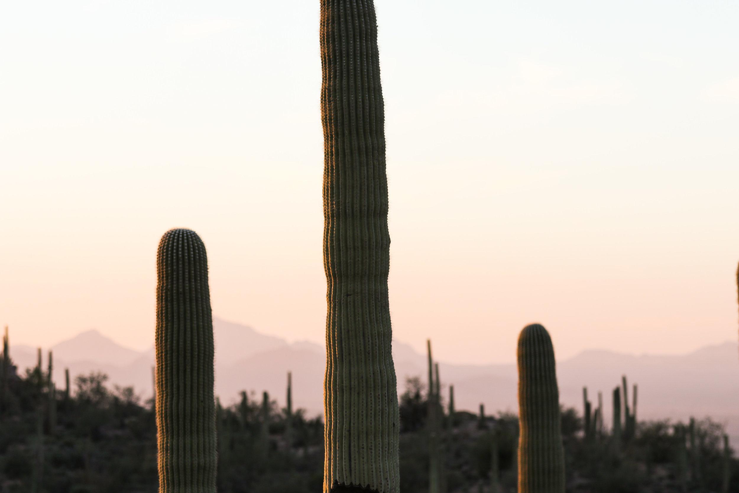 2018_Saguaro-36.jpg