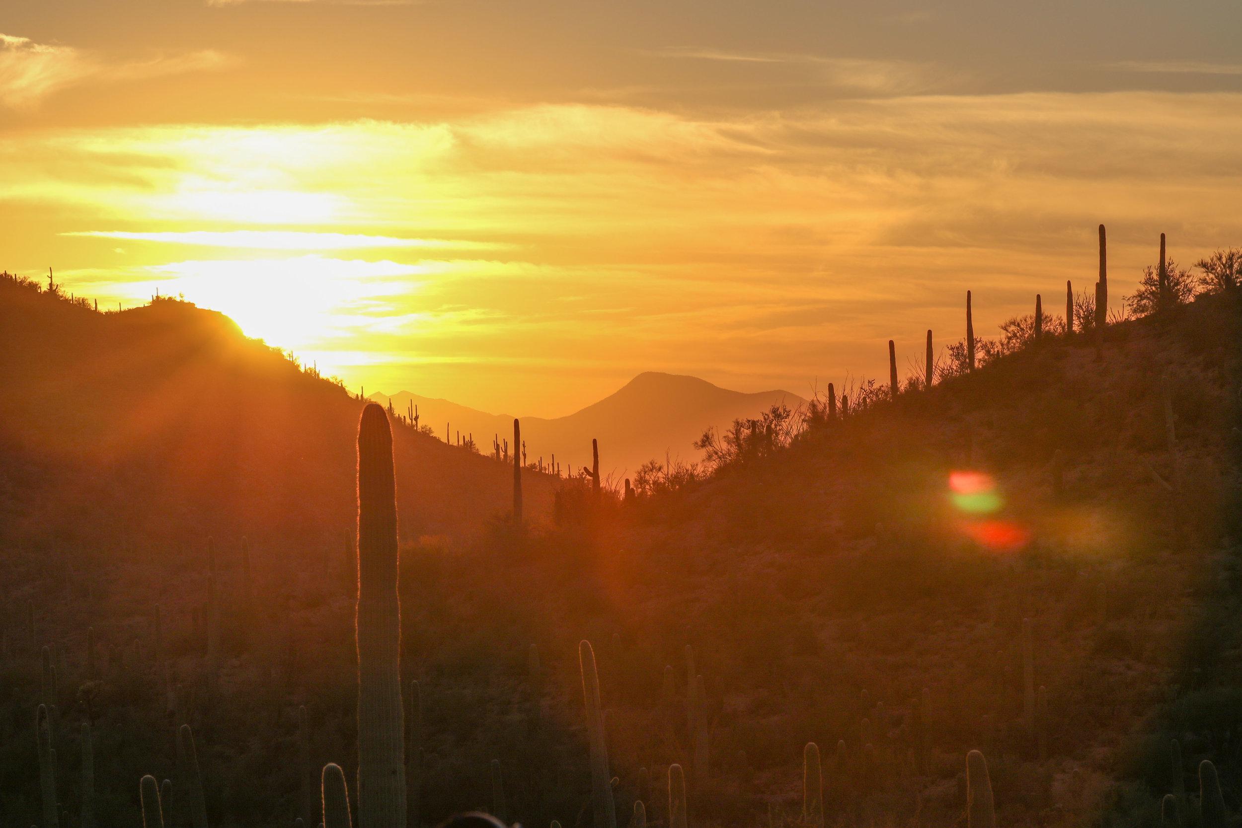 2018_Saguaro-39.jpg