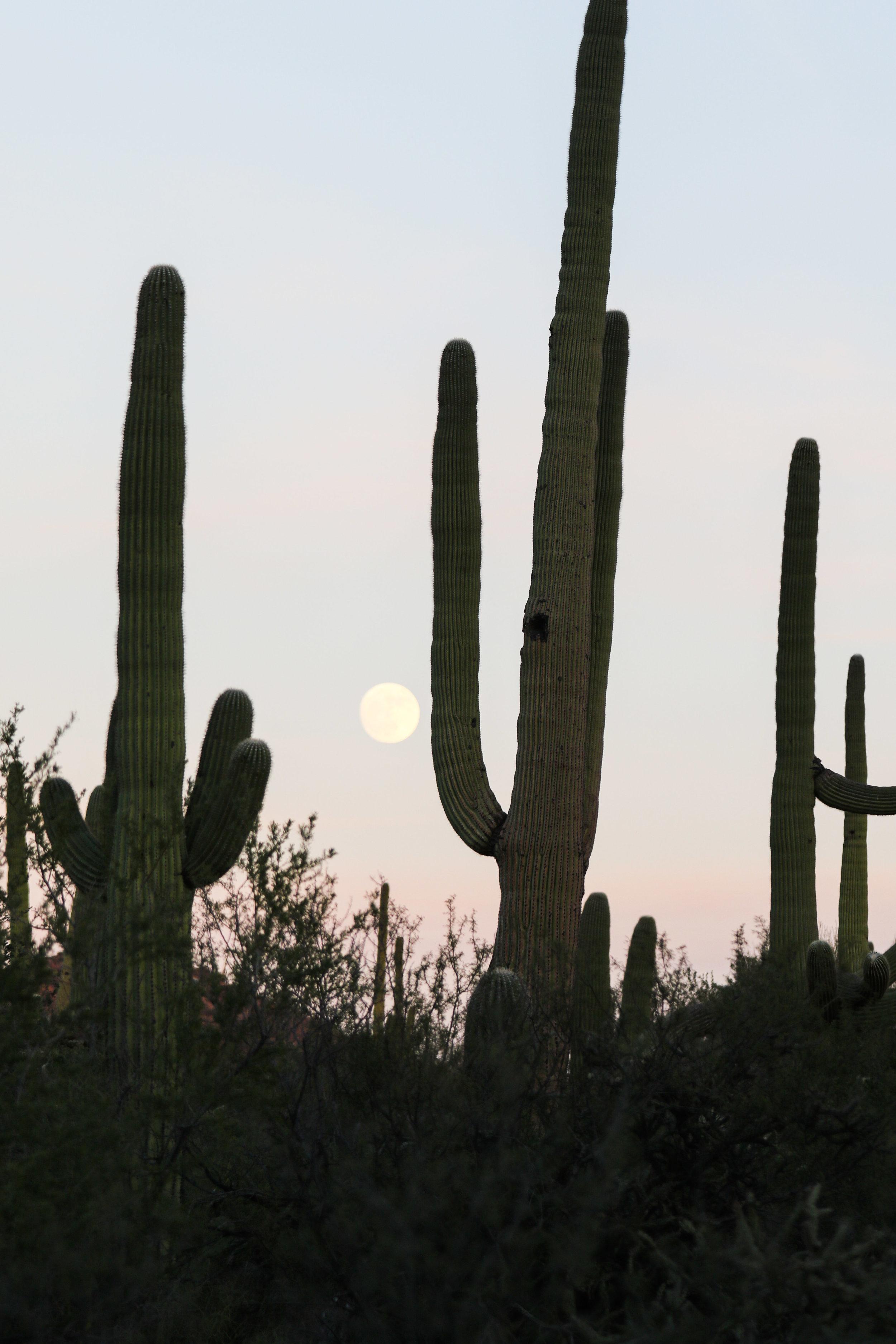 2018_Saguaro-44.jpg