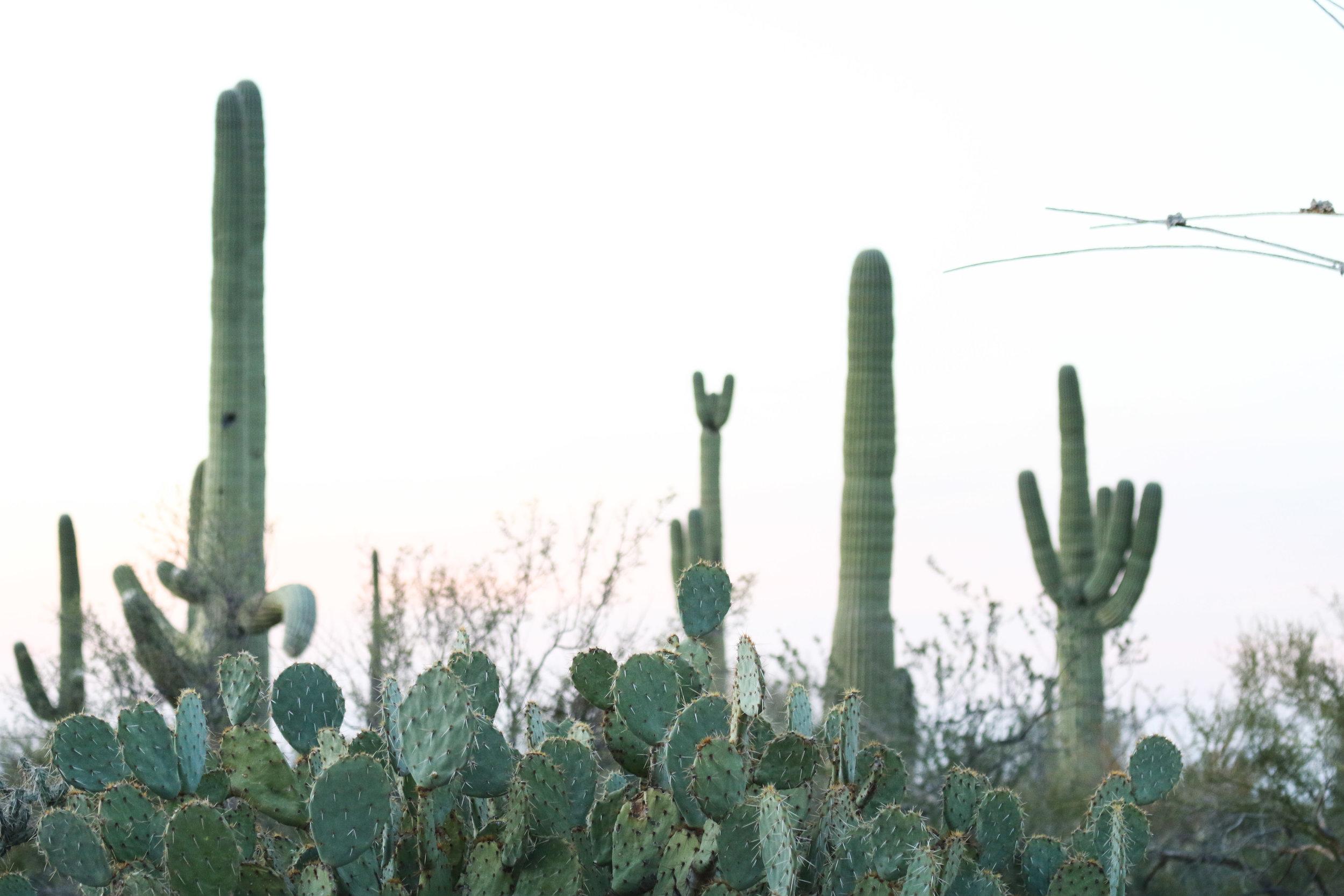 2018_Saguaro-48.jpg