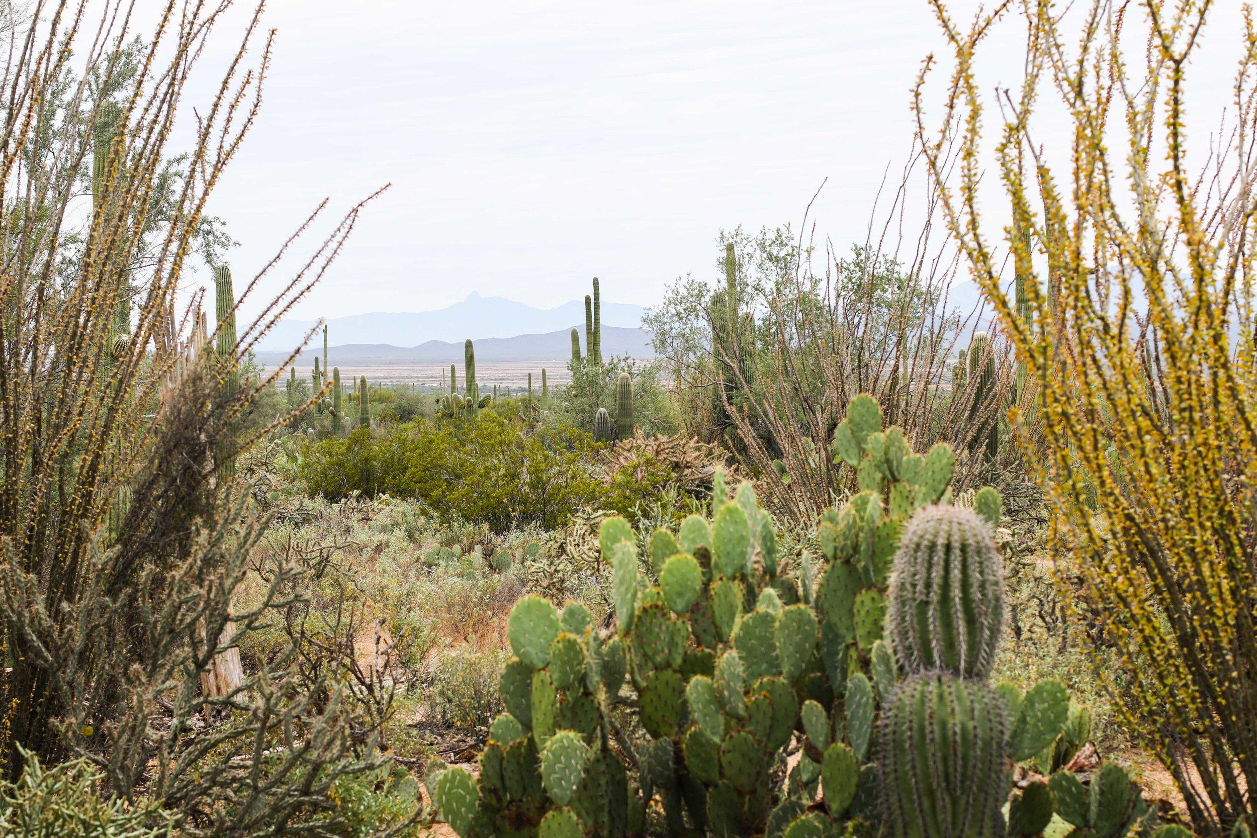 2018_Saguaro-105.jpg