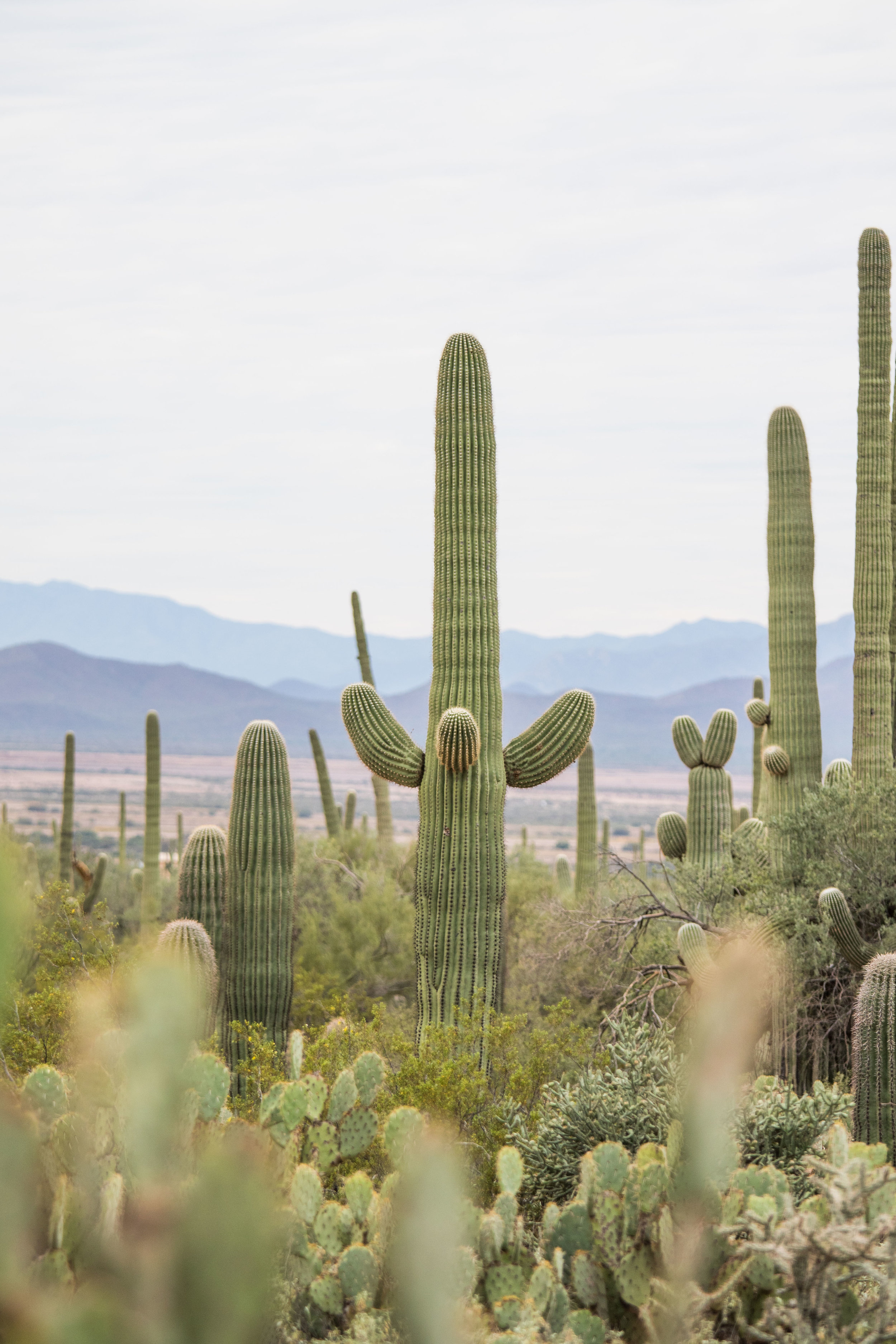 2018_Saguaro-163.jpg