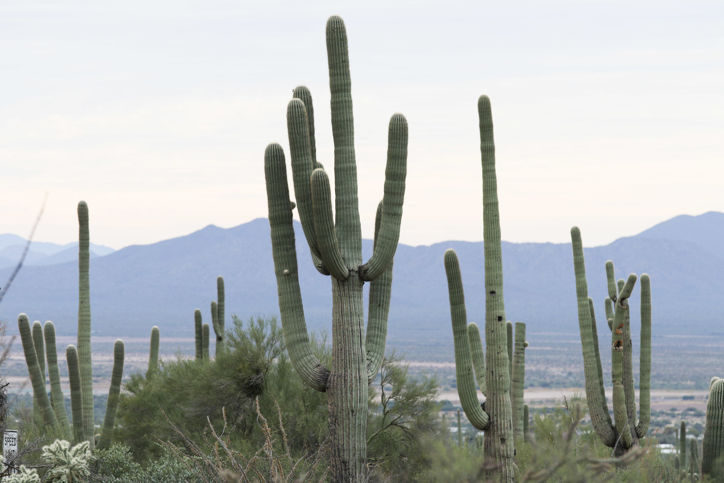 2018_Saguaro-182.jpg
