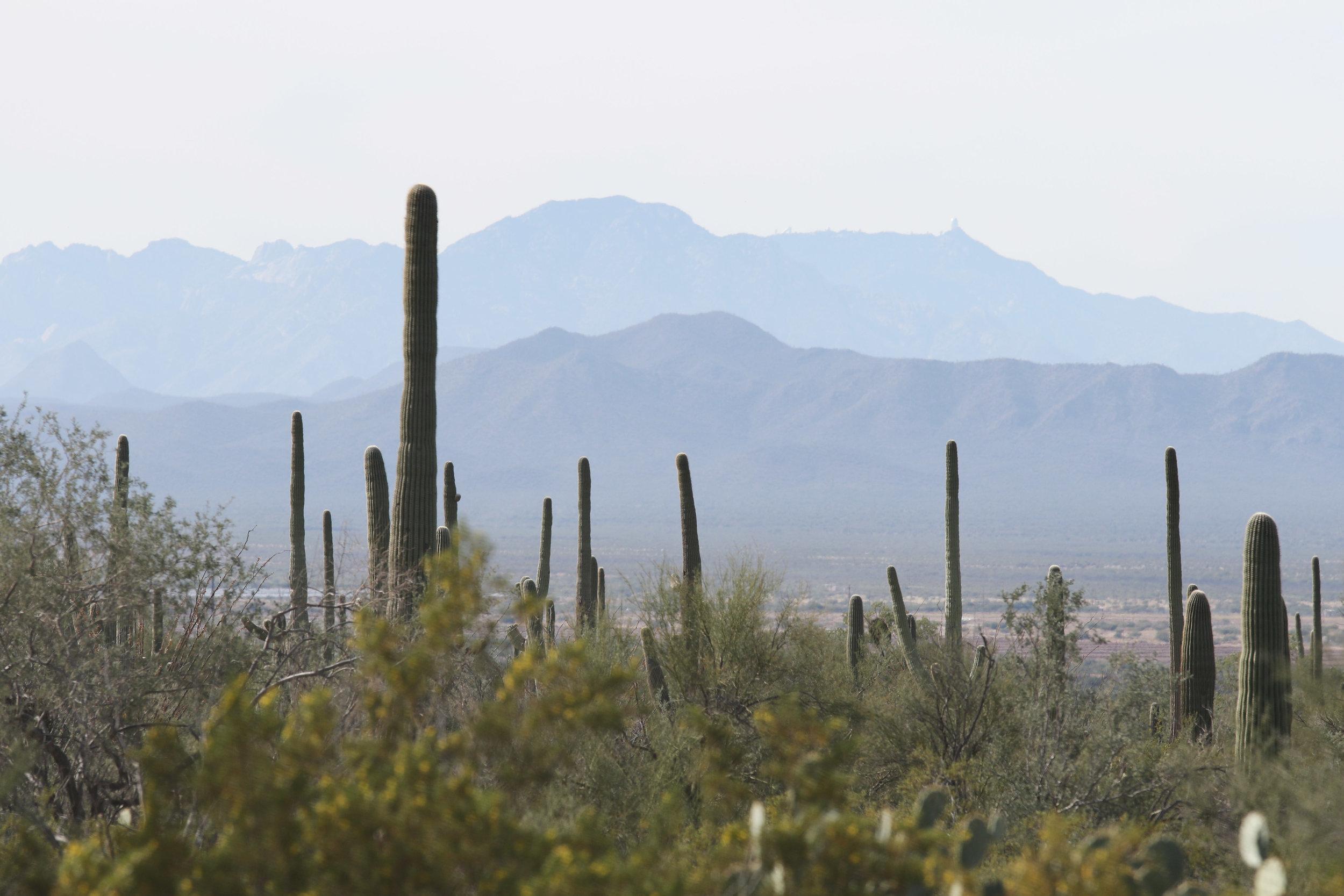 2018_Saguaro-297.jpg