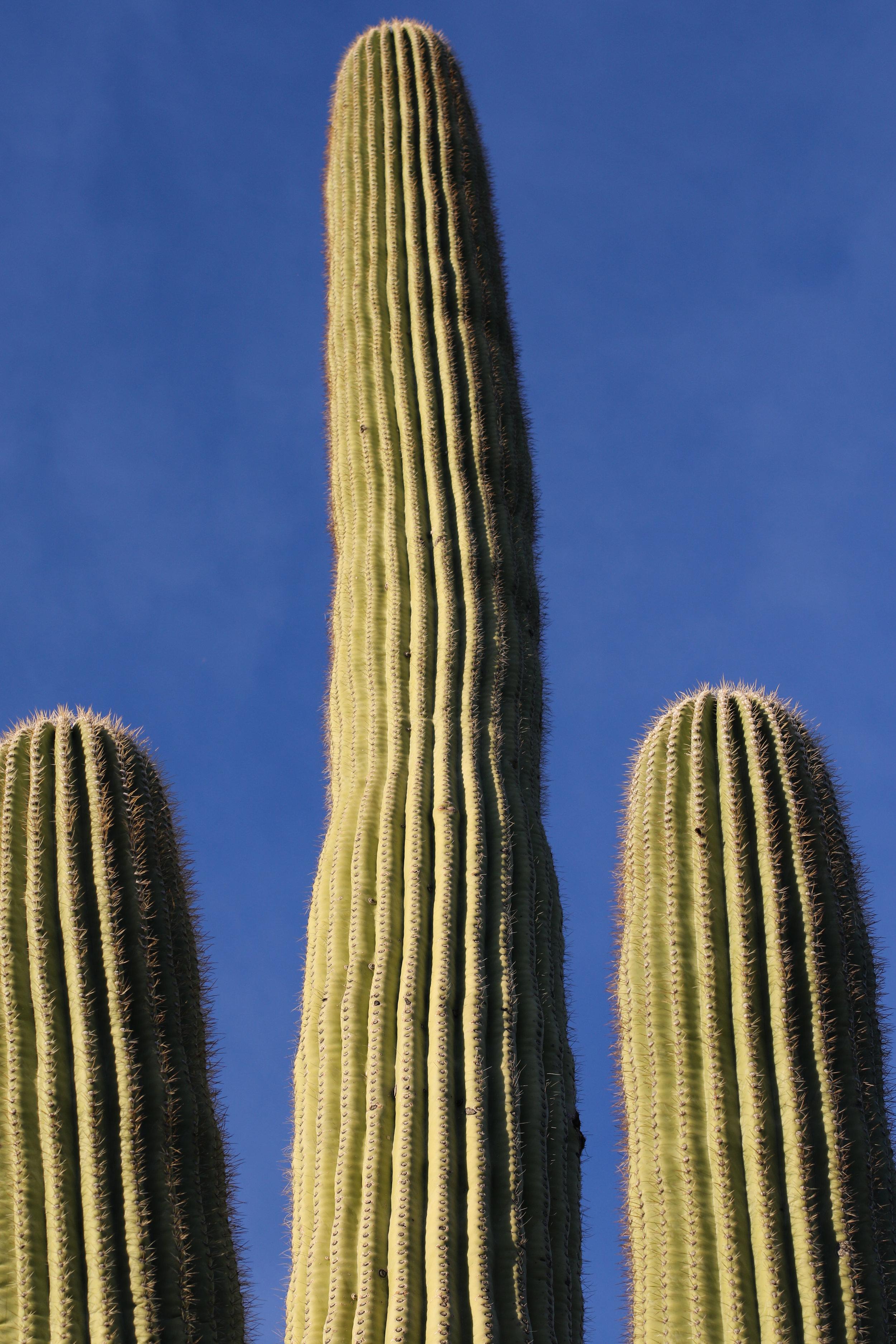 2018_Saguaro-377.jpg