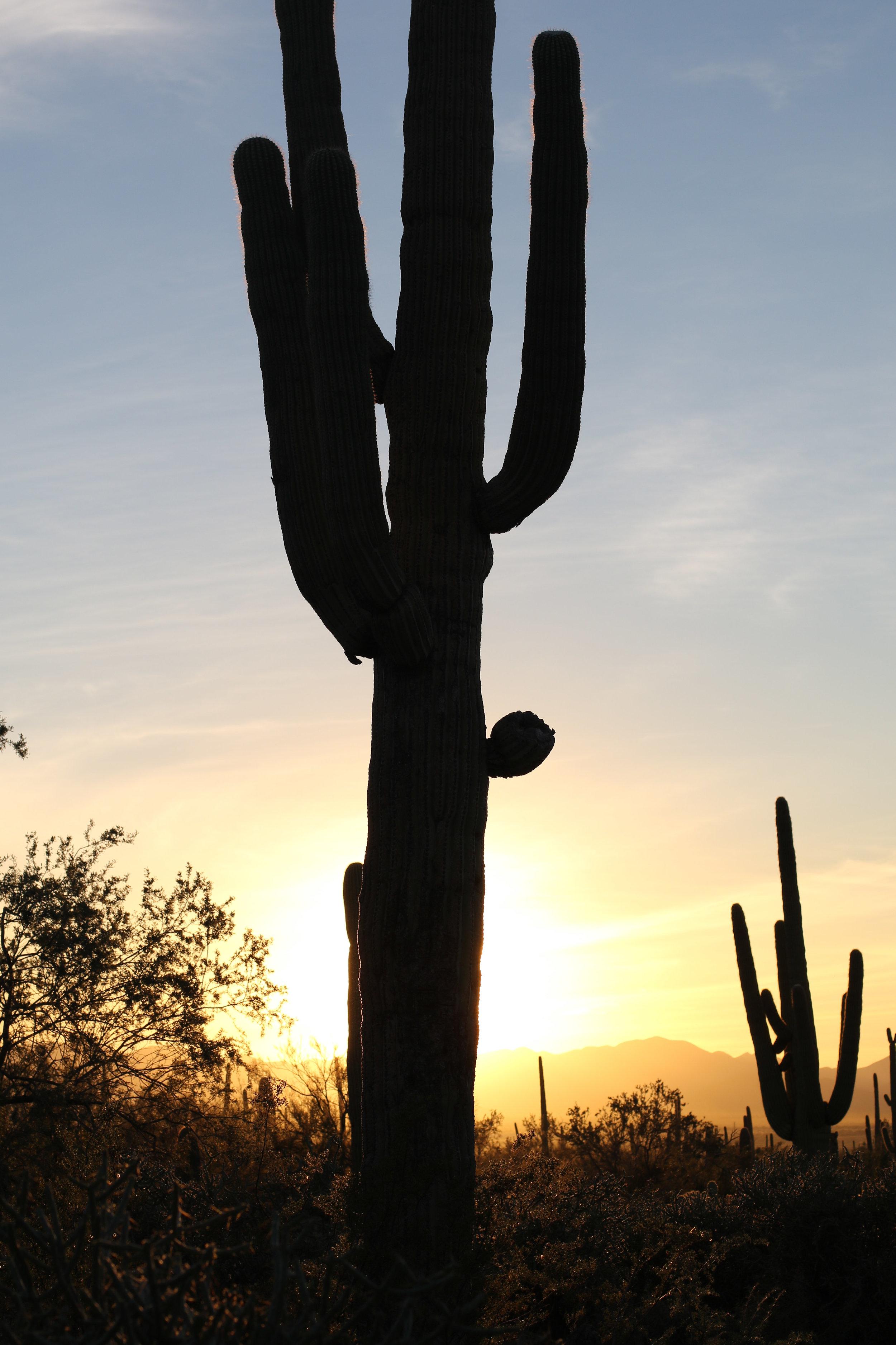2018_Saguaro-421.jpg