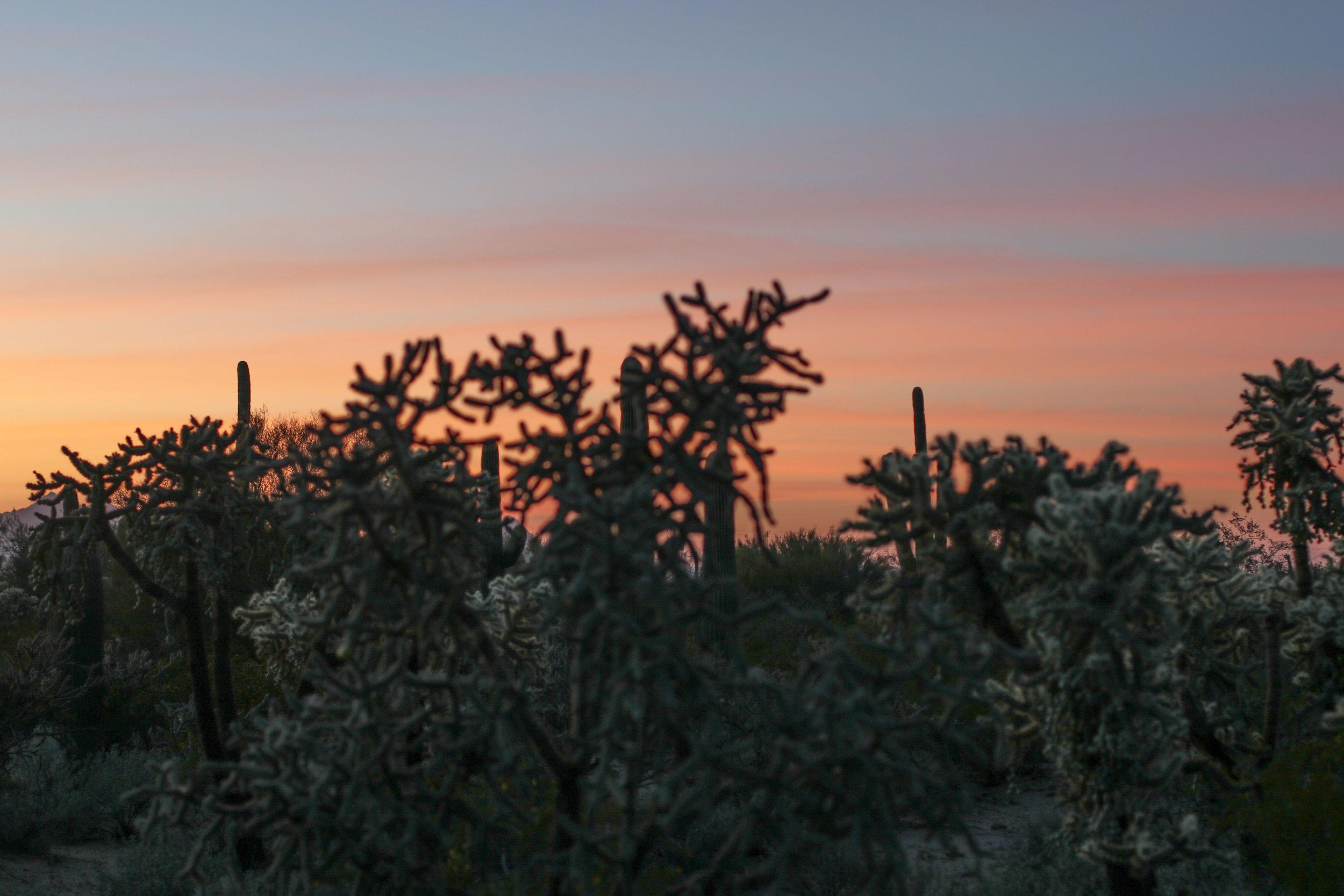 2018_Saguaro-457.jpg