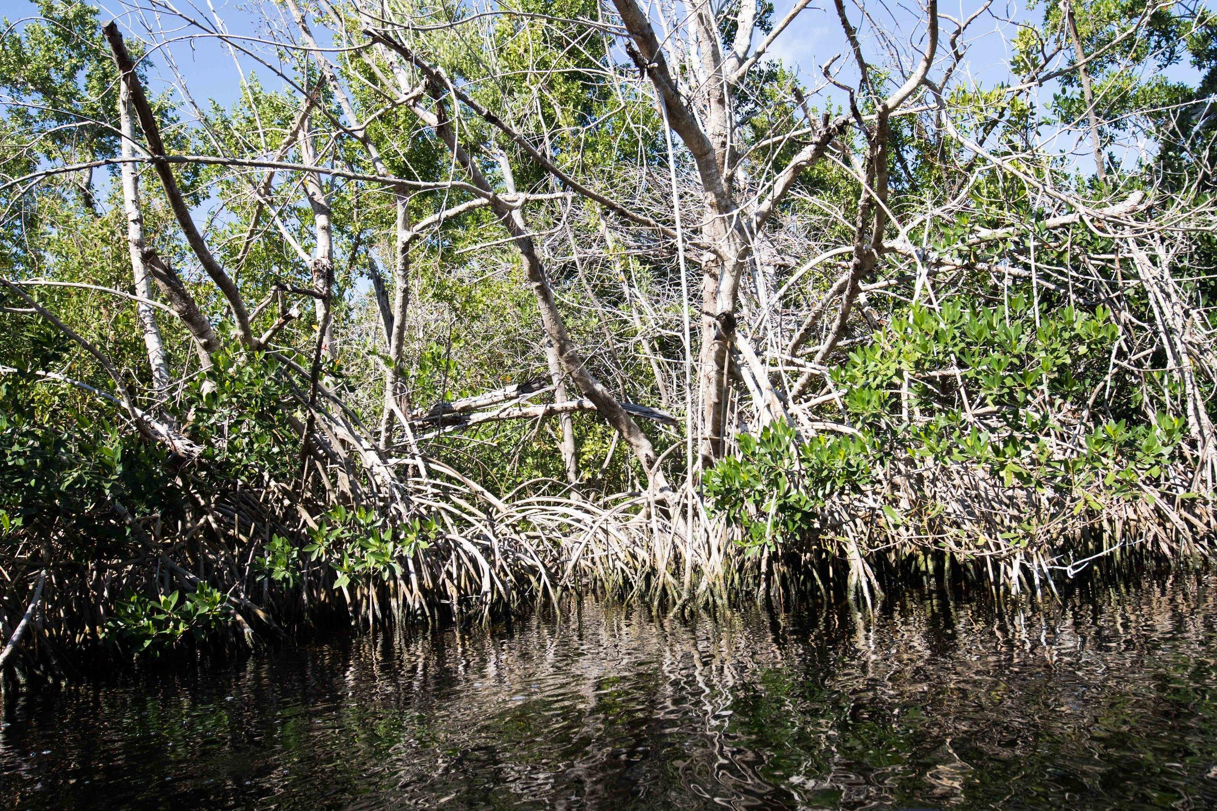 2019_Everglades-32.jpg