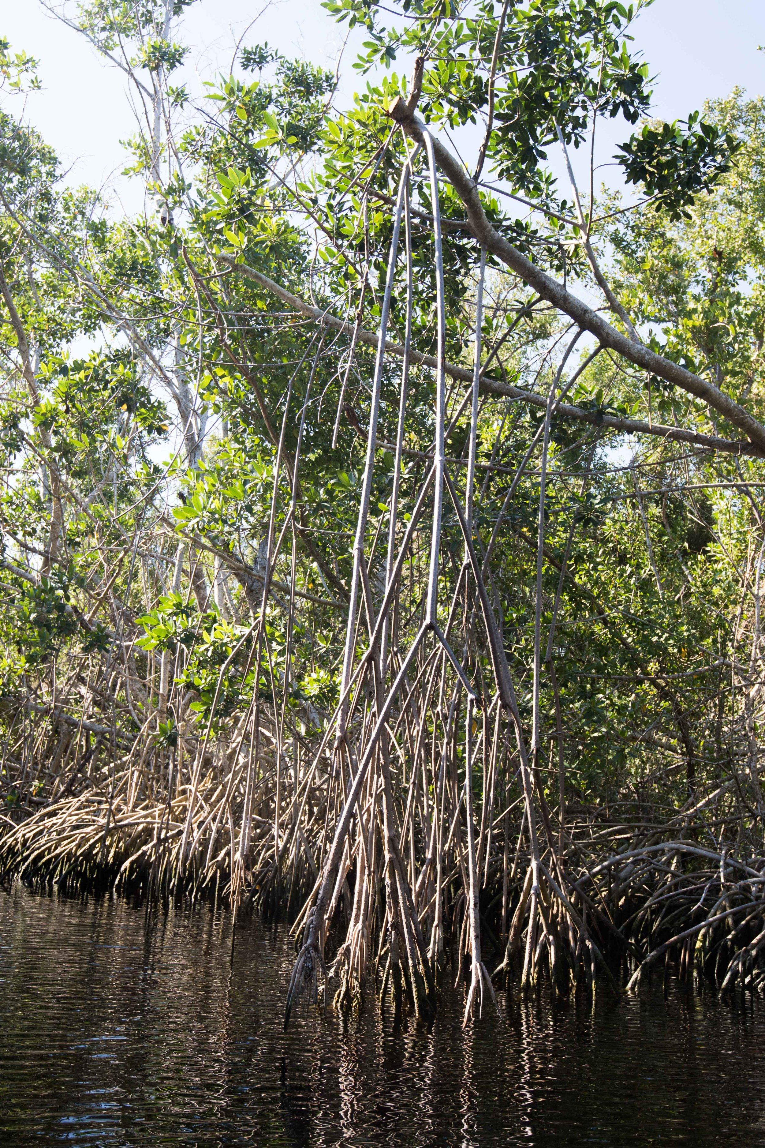 2019_Everglades-36.jpg