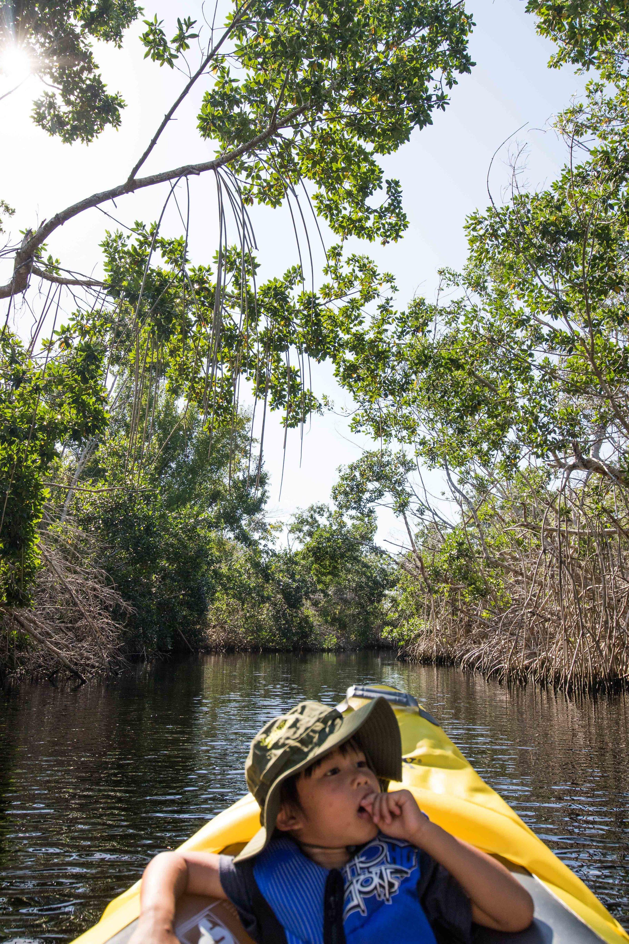 2019_Everglades-37.jpg