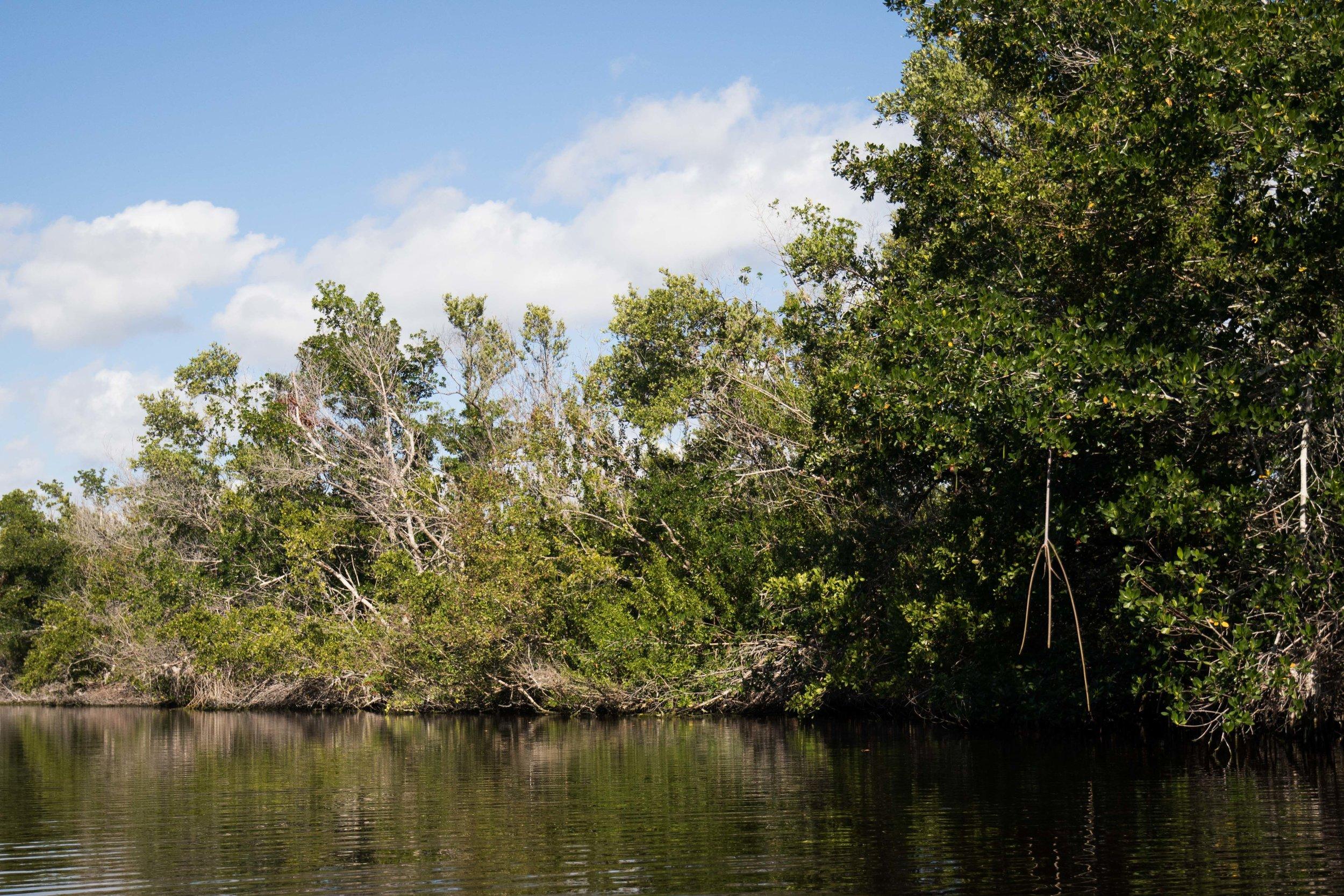 2019_Everglades-44.jpg