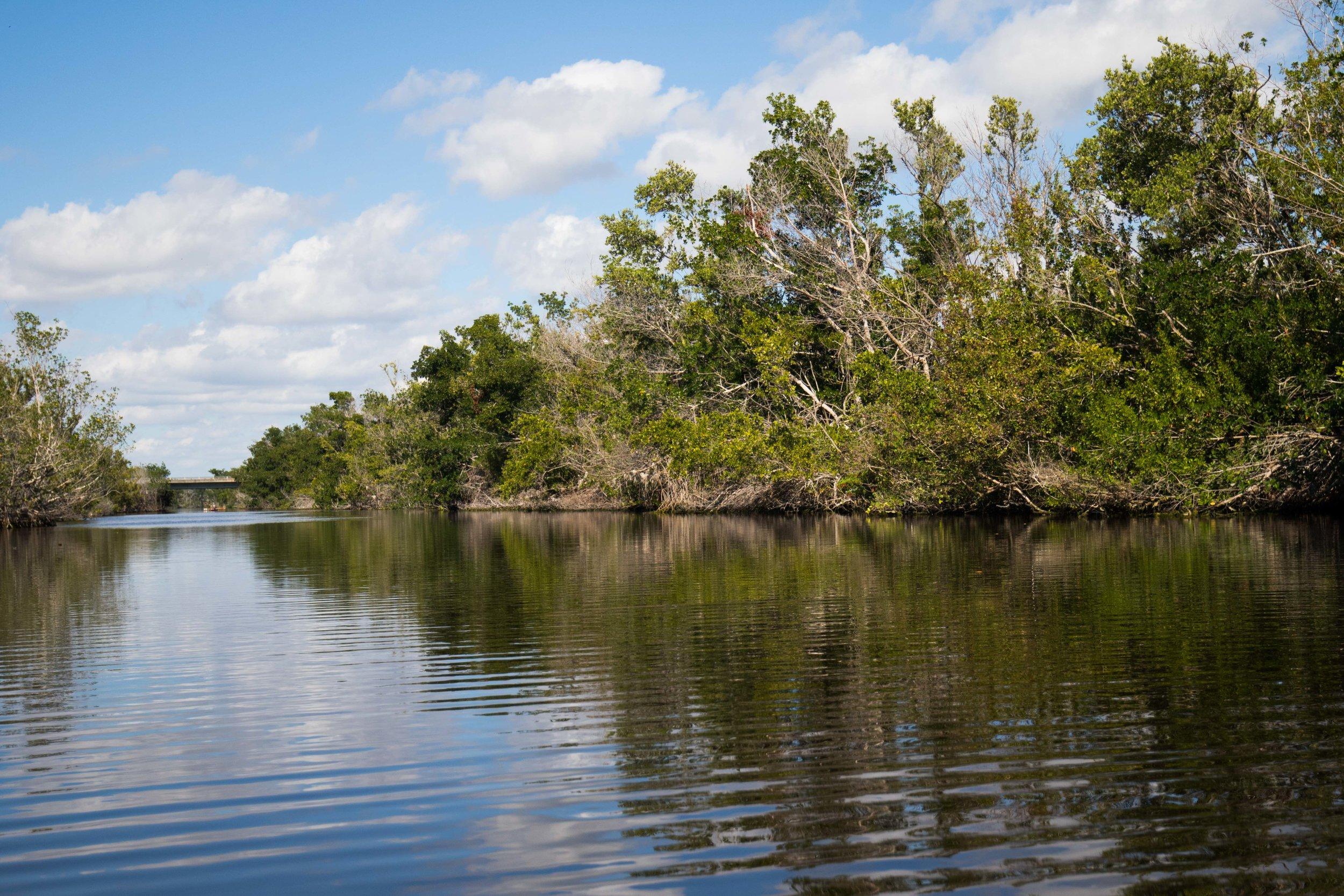 2019_Everglades-45.jpg