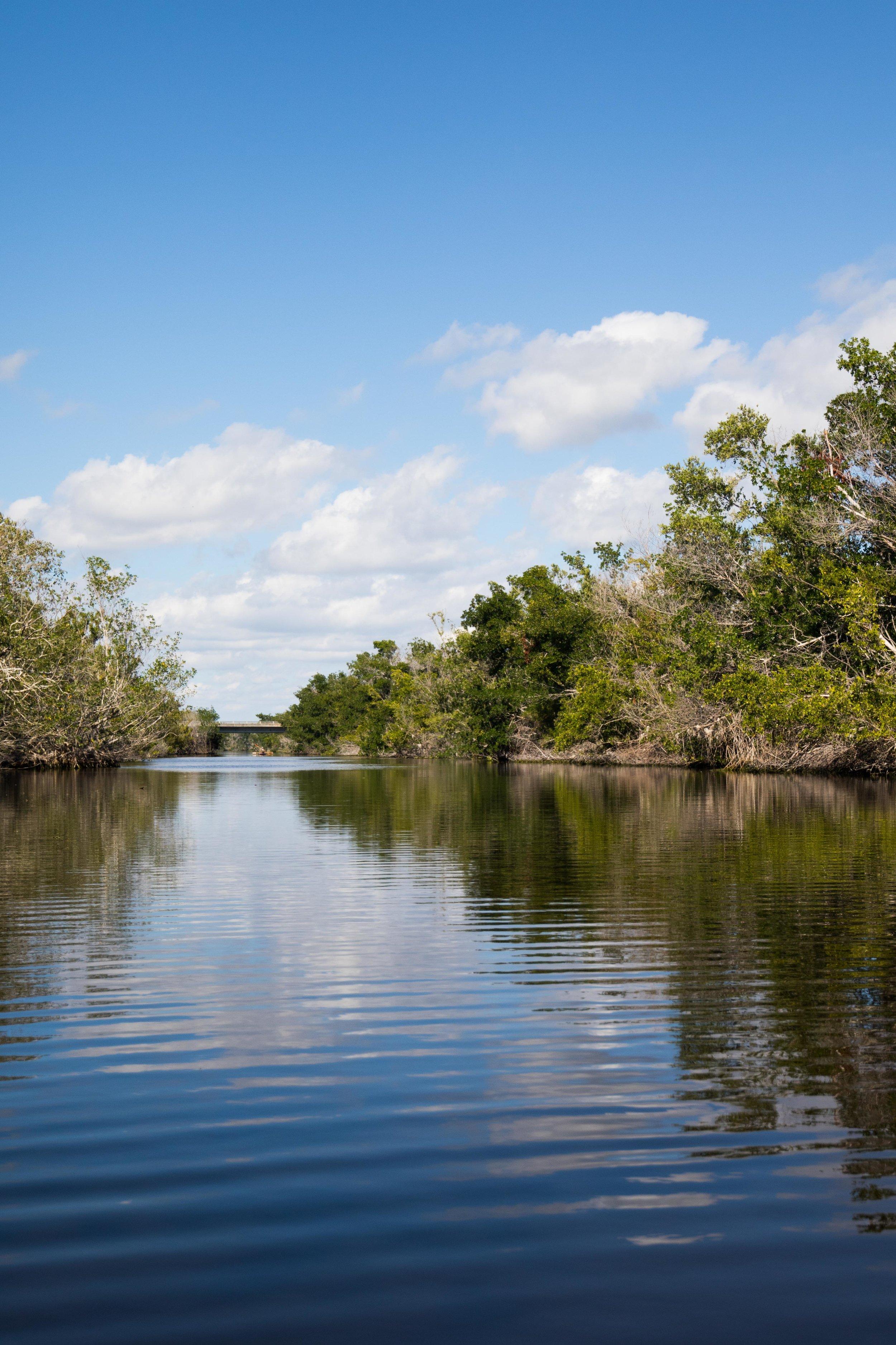 2019_Everglades-46.jpg