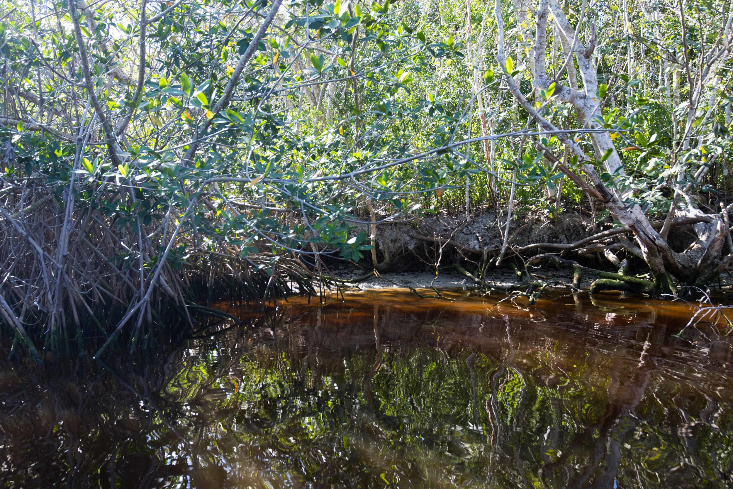 2019_Everglades-47.jpg