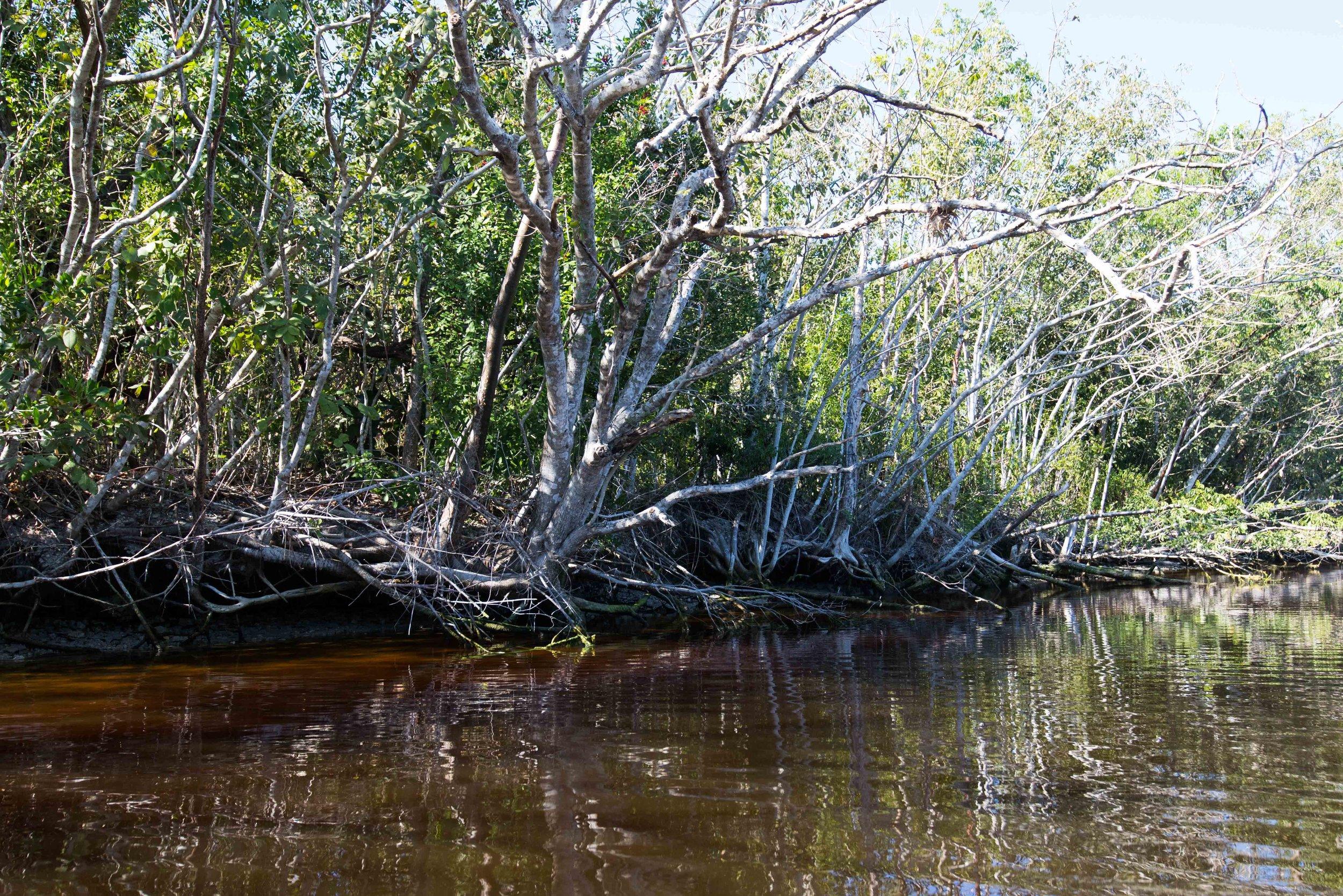 2019_Everglades-48.jpg