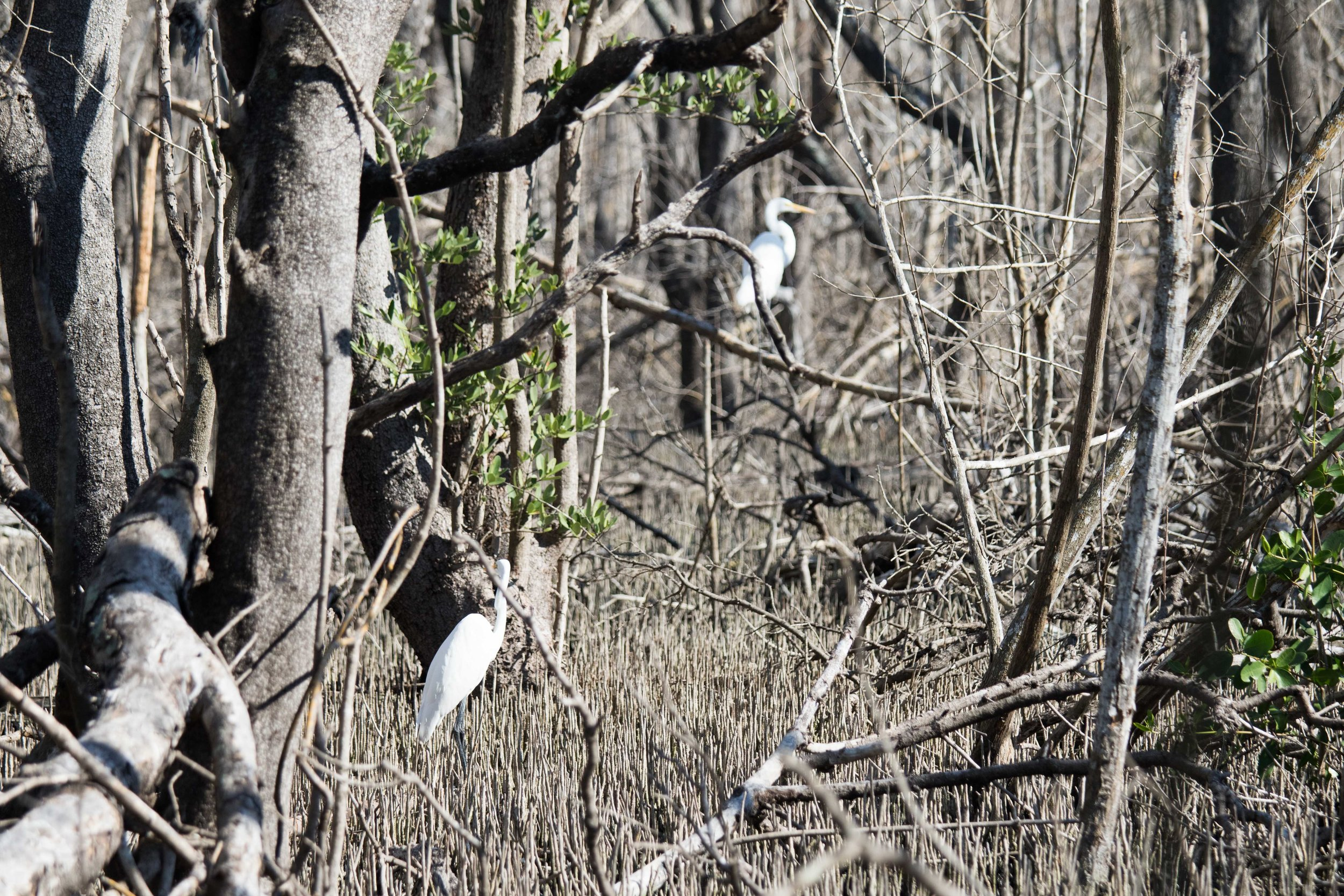 2019_Everglades-53.jpg