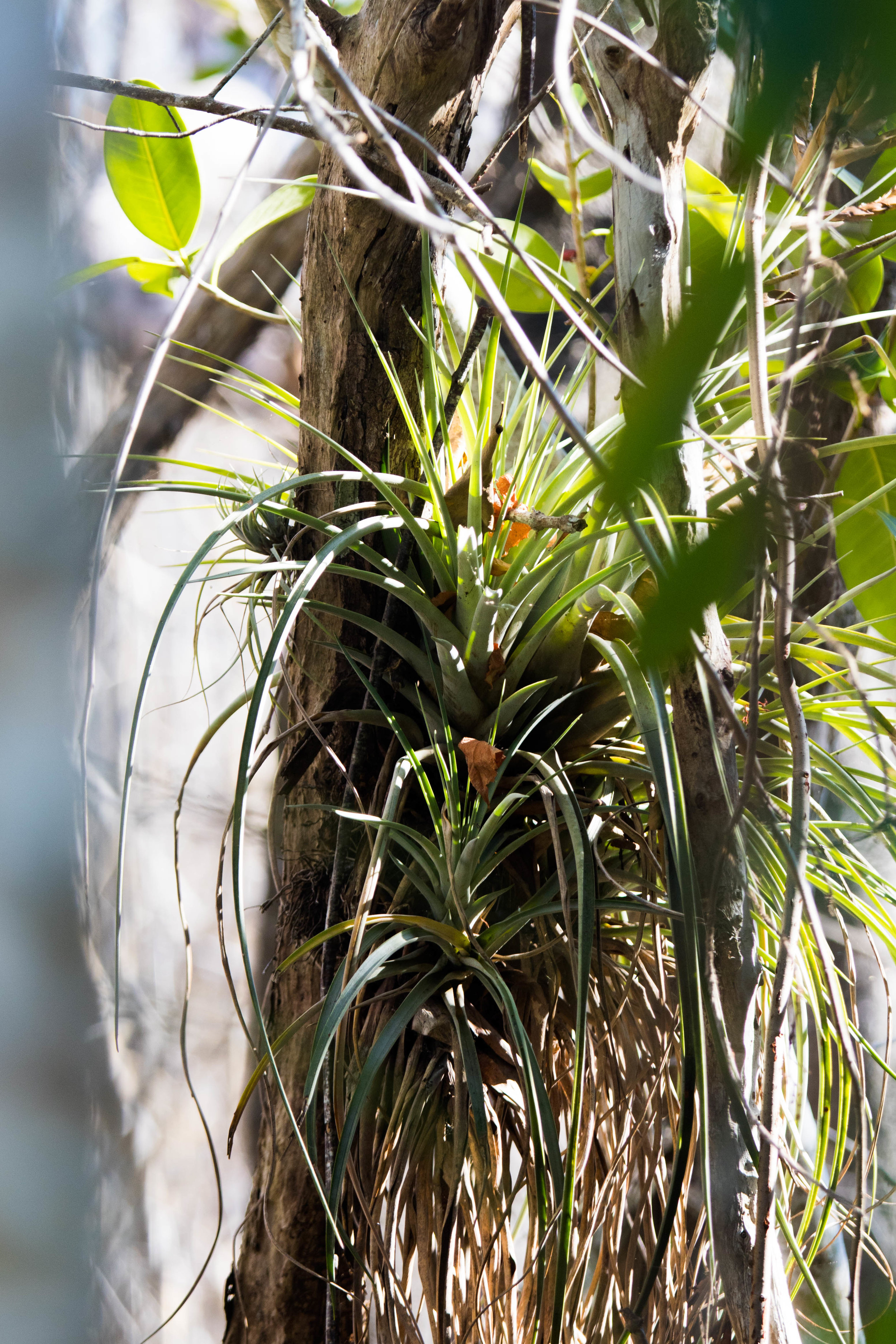 2019_Everglades-54.jpg