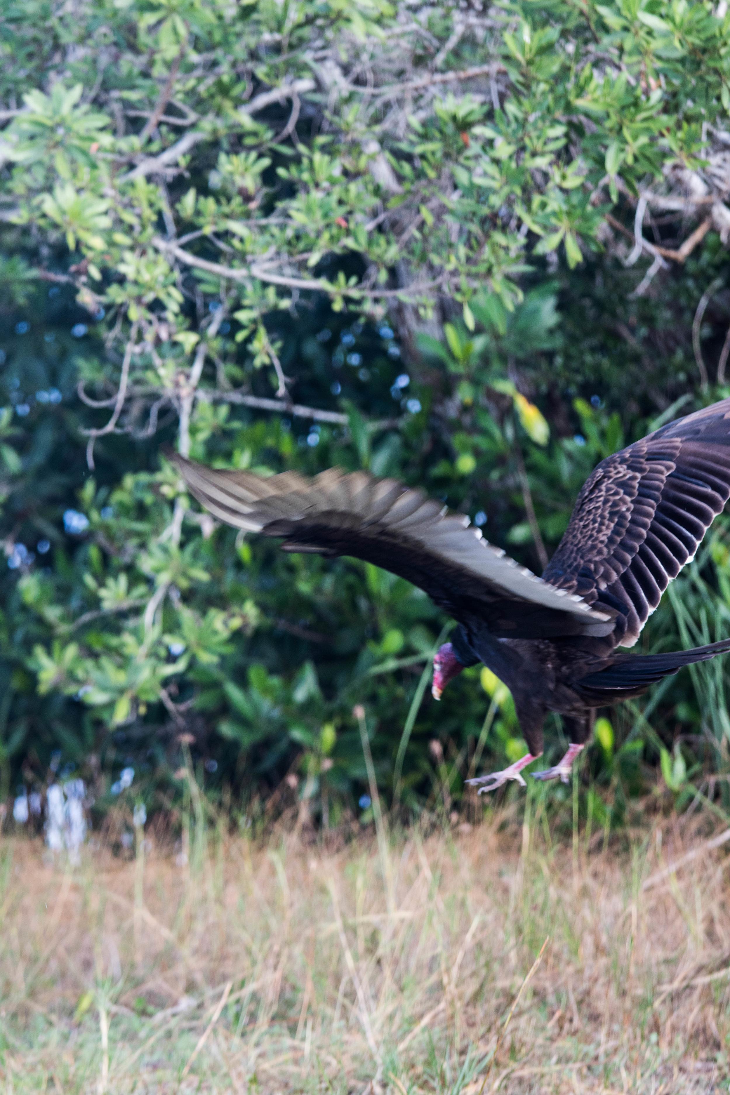2019_Everglades-55.jpg