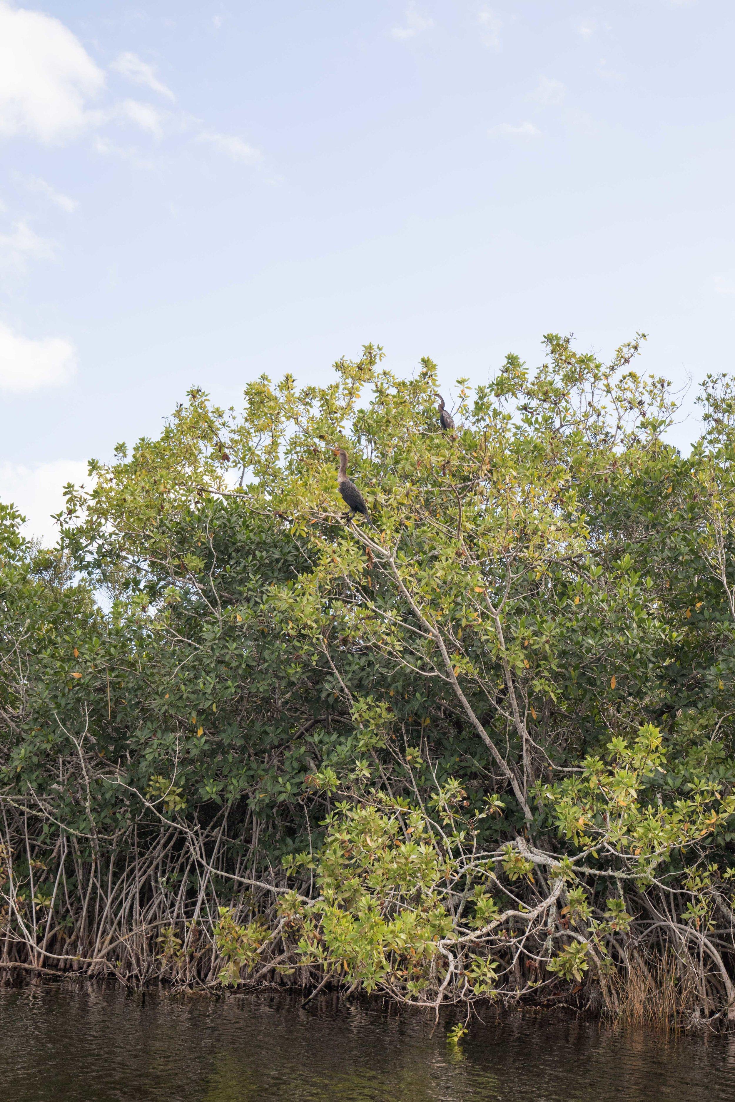 2019_Everglades-80.jpg
