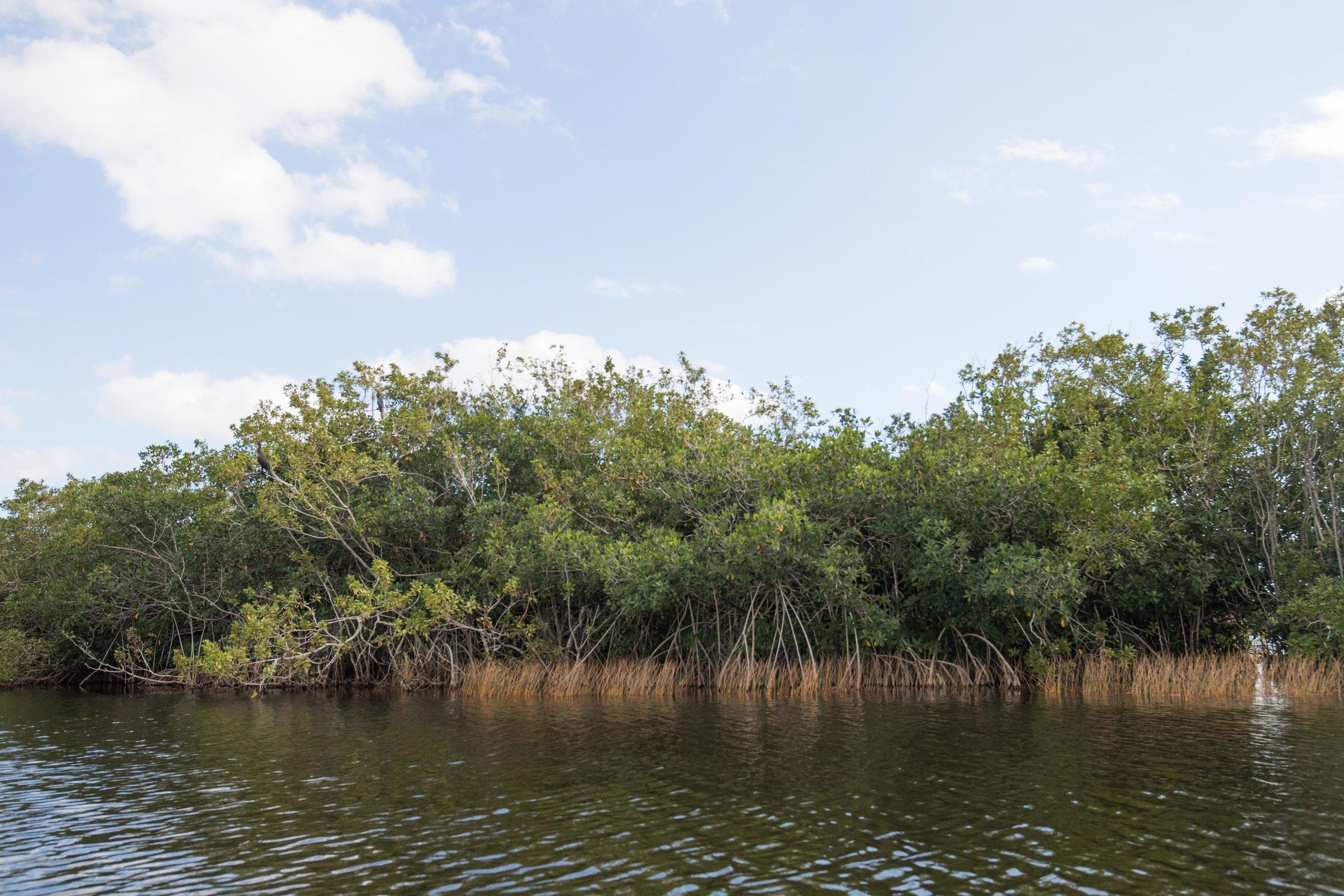 2019_Everglades-78.jpg