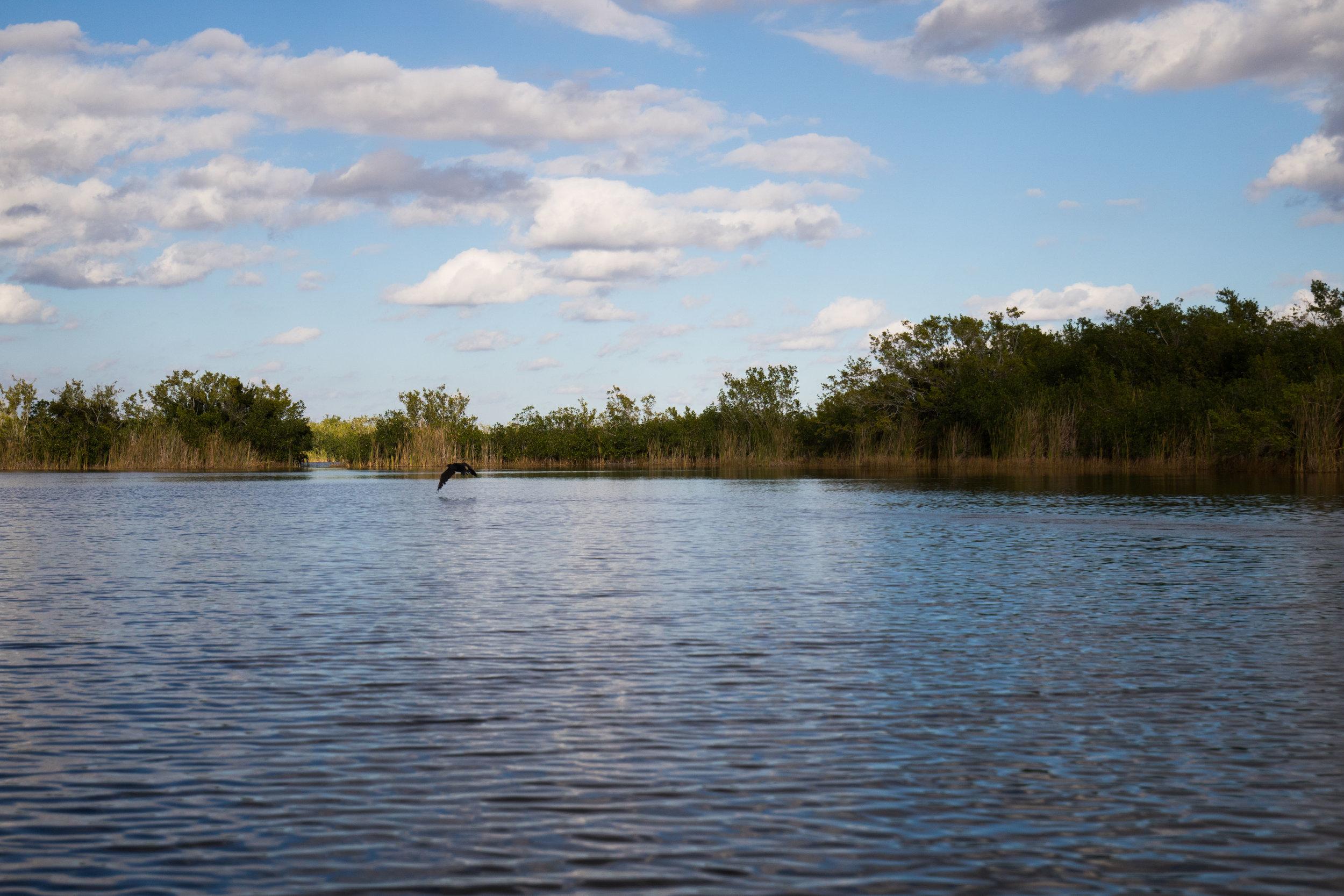 2019_Everglades-81.jpg
