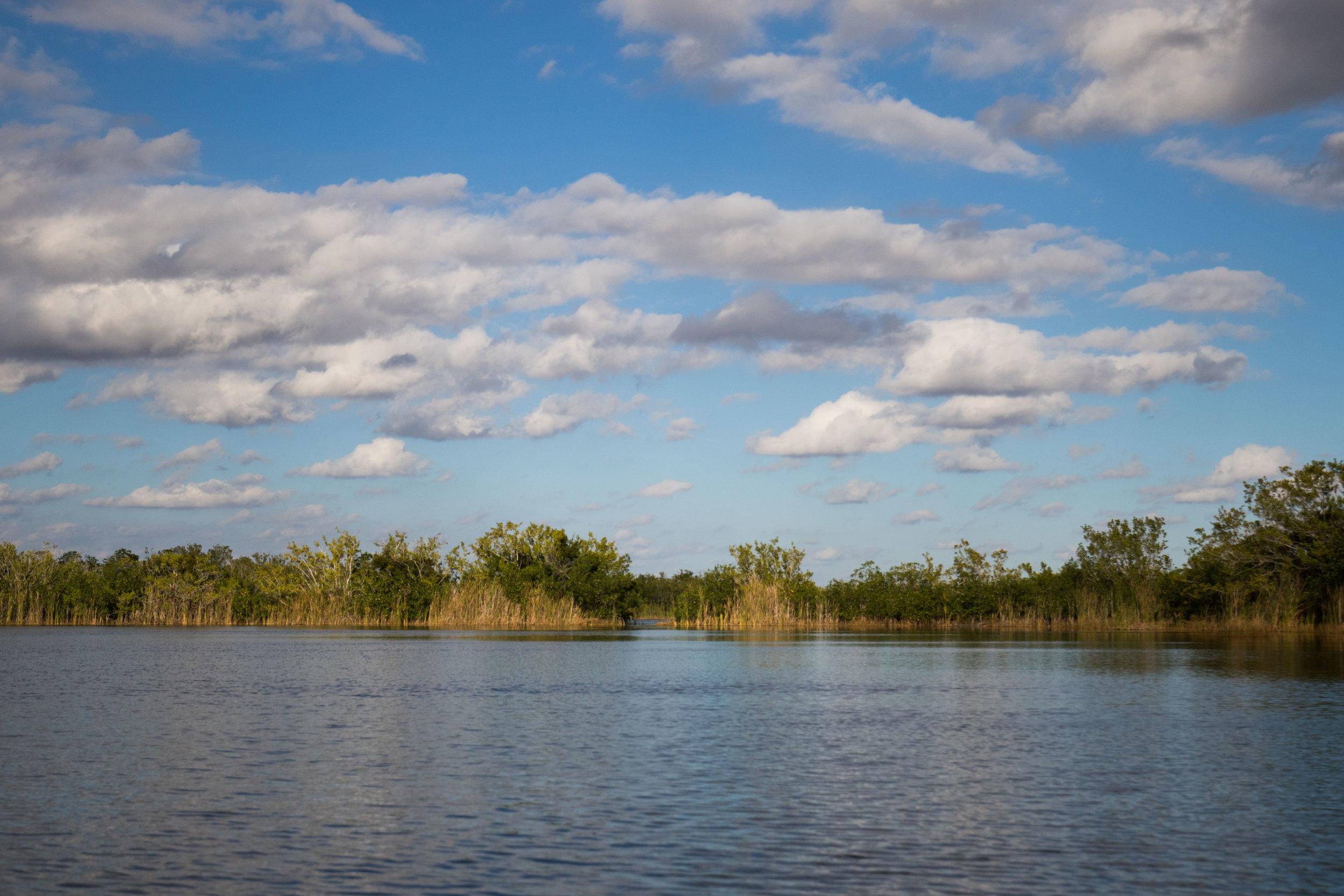 2019_Everglades-82.jpg