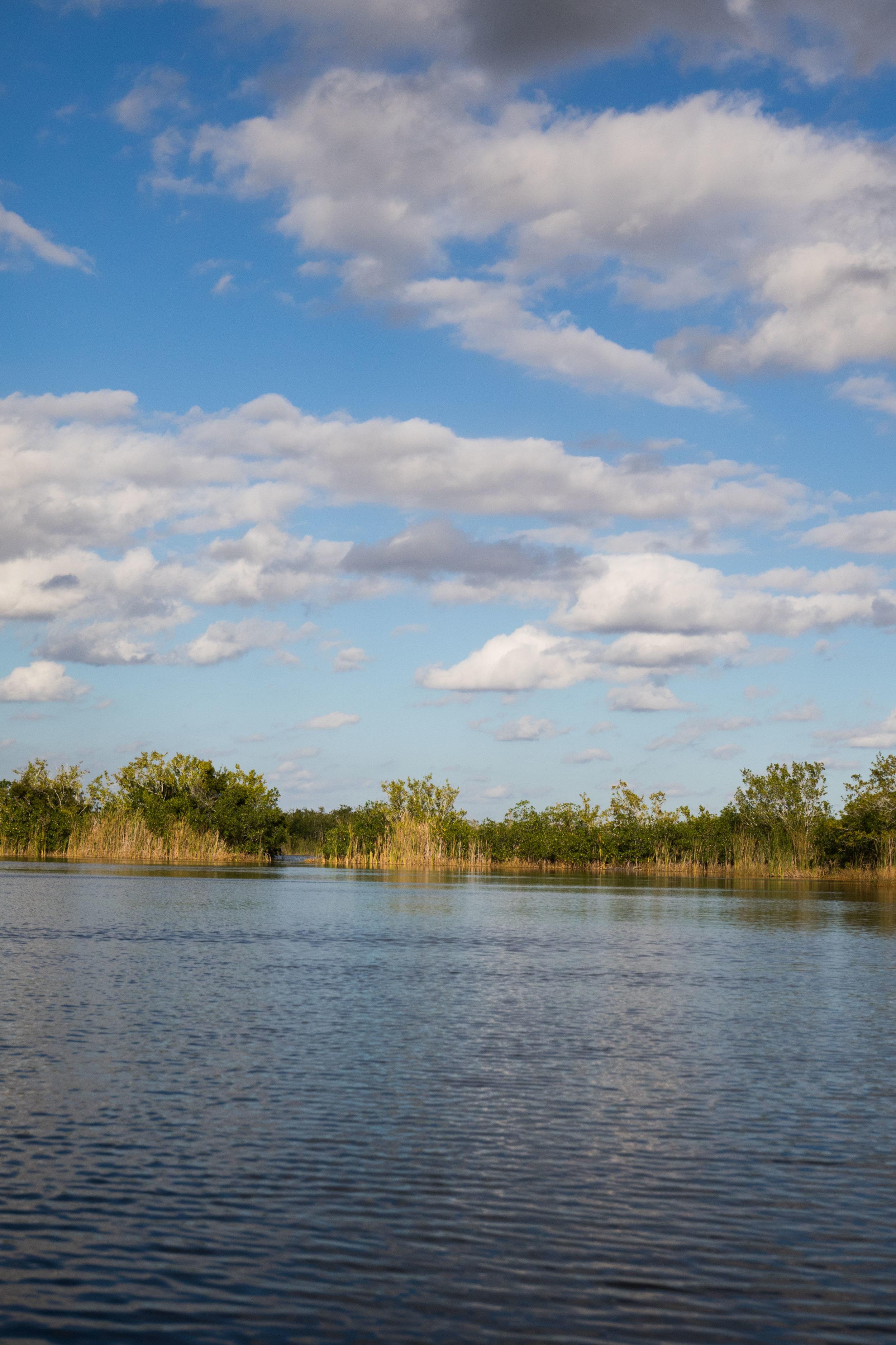 2019_Everglades-83.jpg
