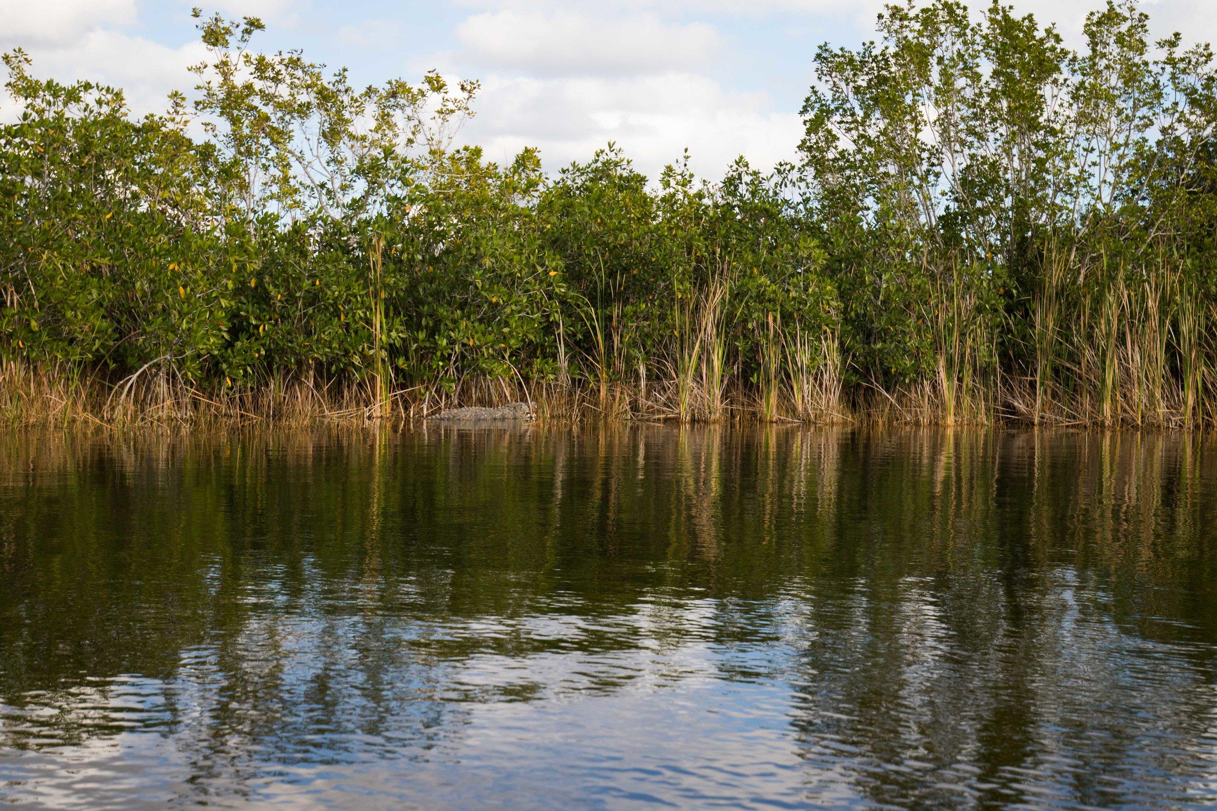 2019_Everglades-87.jpg