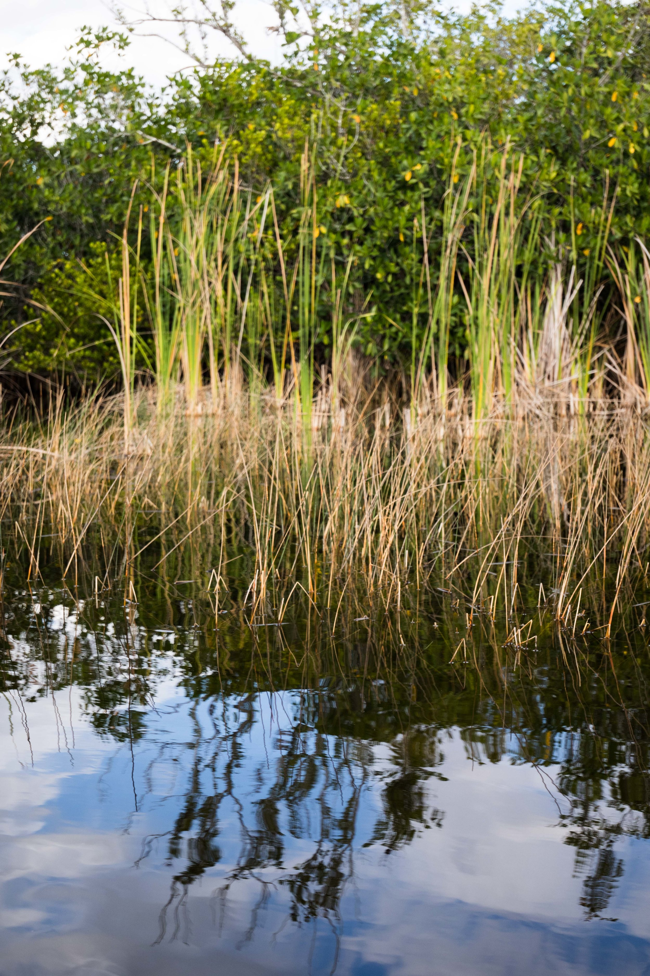 2019_Everglades-92.jpg