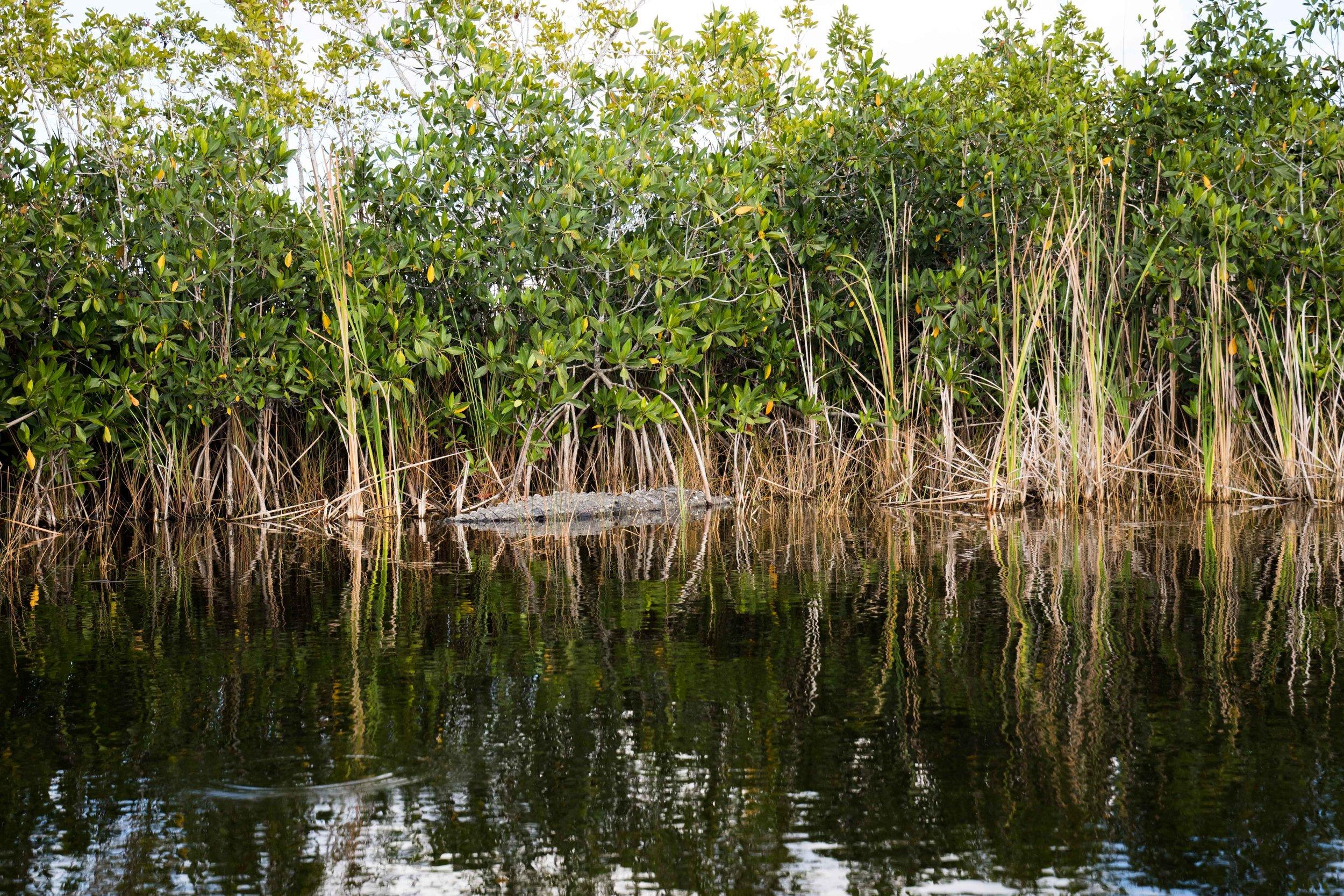2019_Everglades-93.jpg