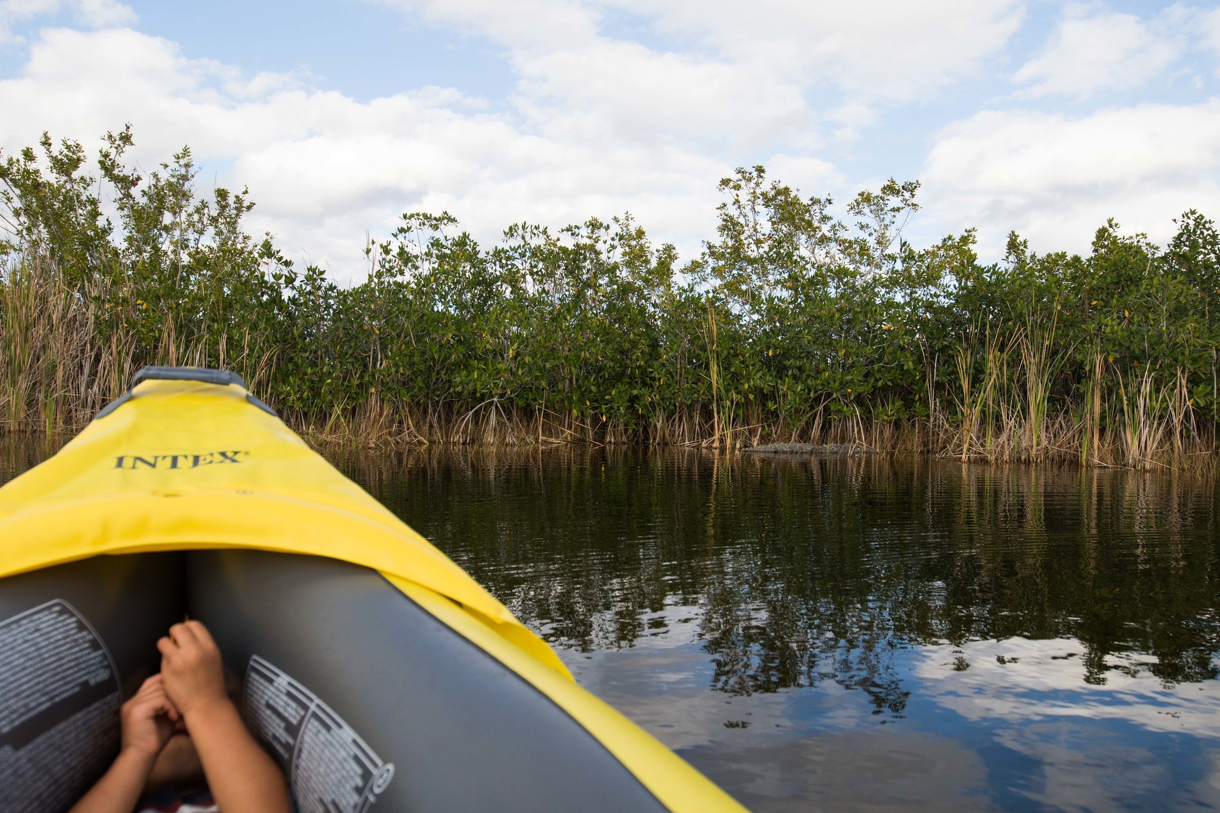 2019_Everglades-95.jpg