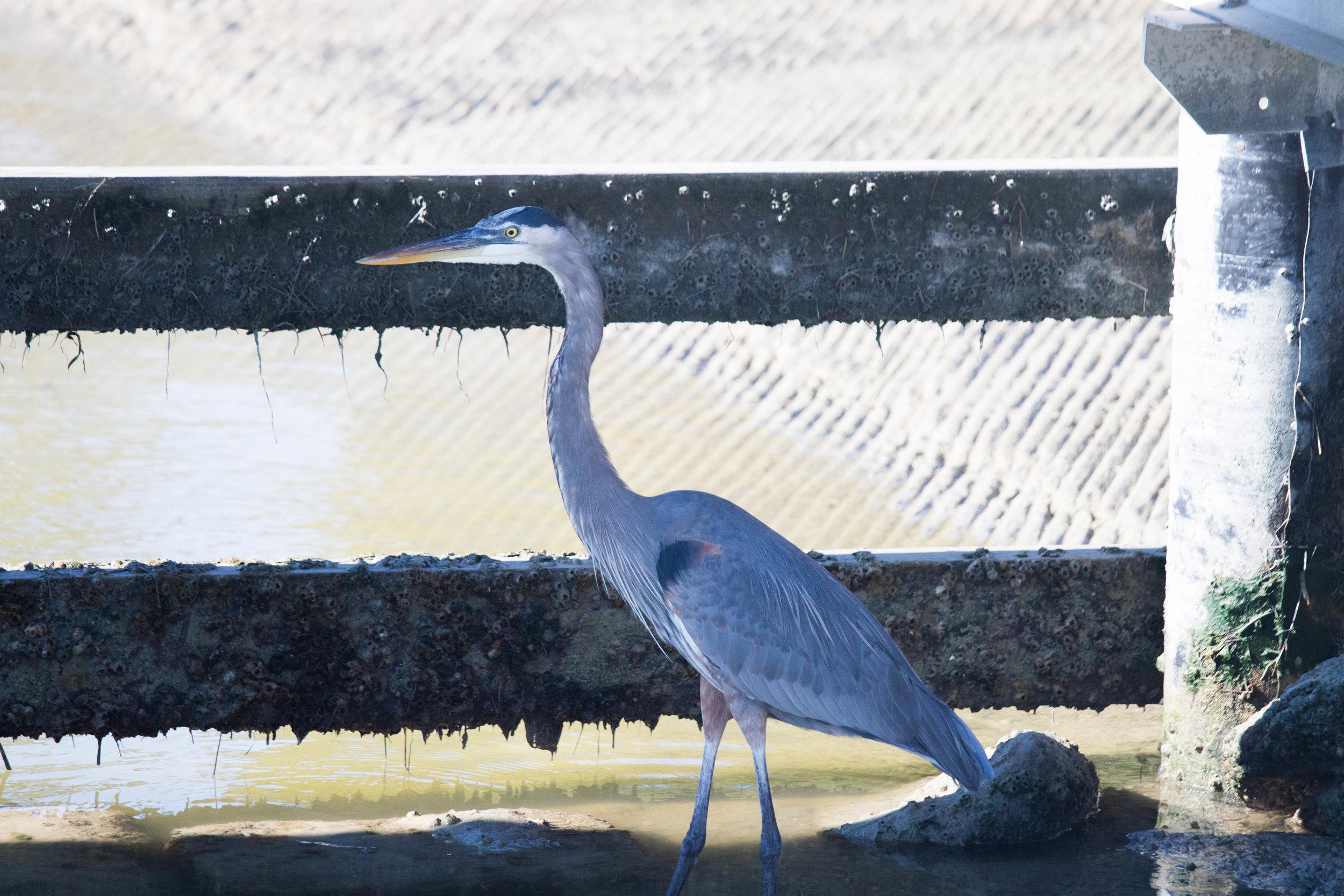 2019_Everglades-98.jpg