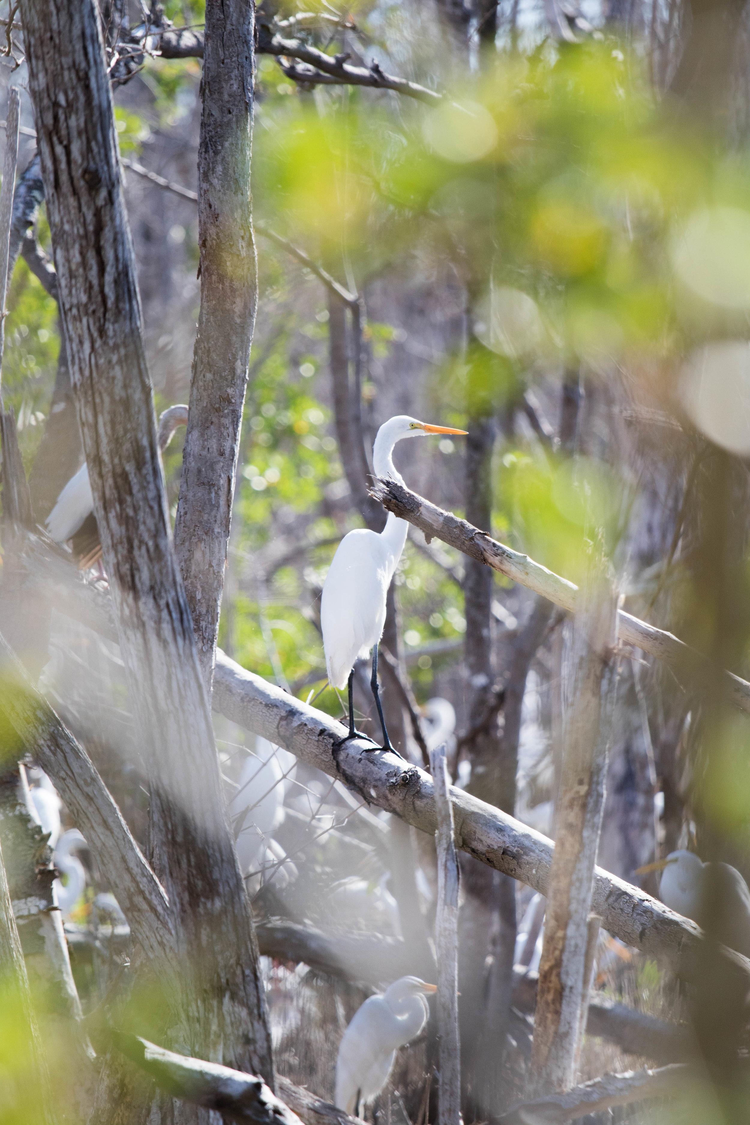 2019_Everglades-111.jpg