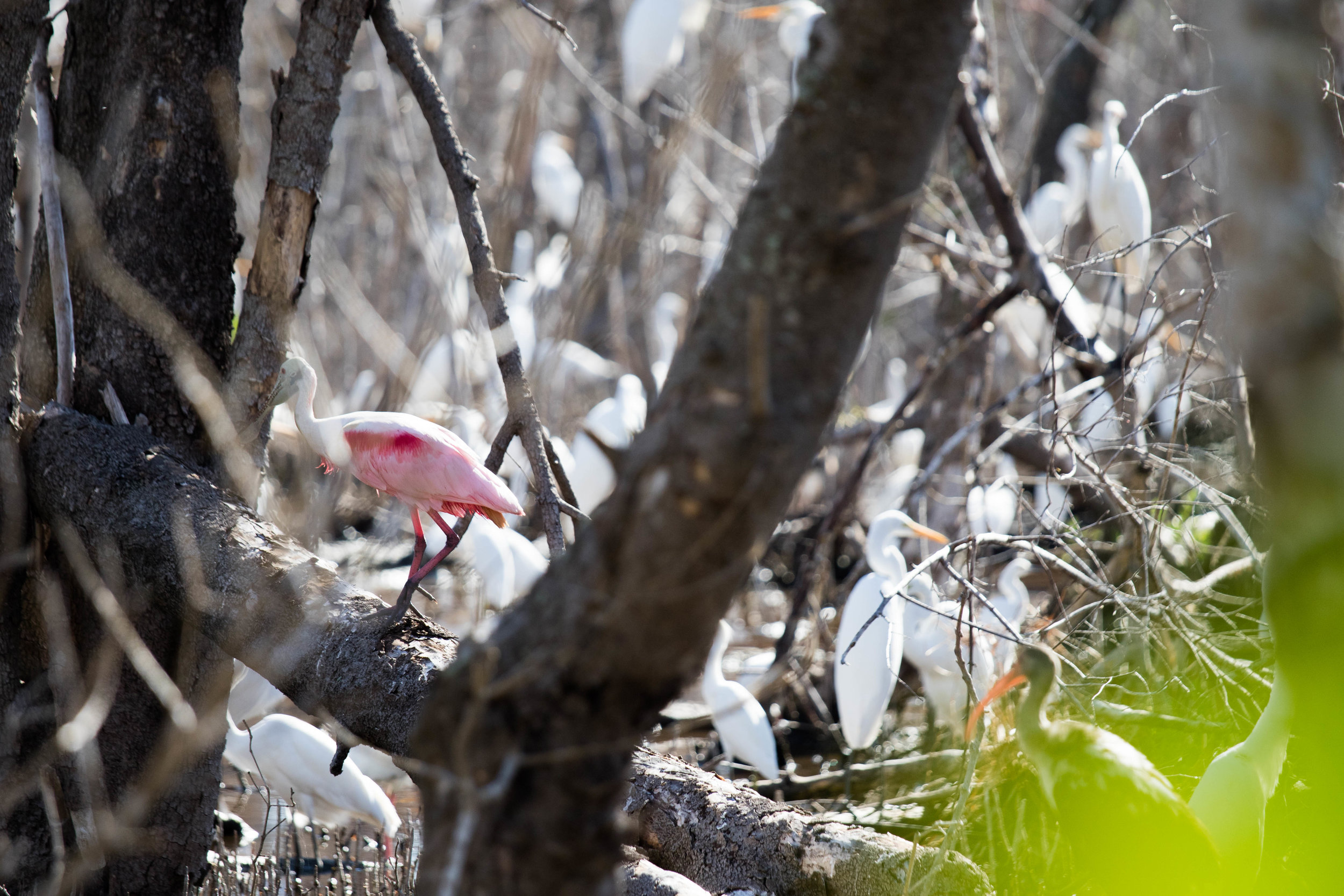 2019_Everglades-112.jpg