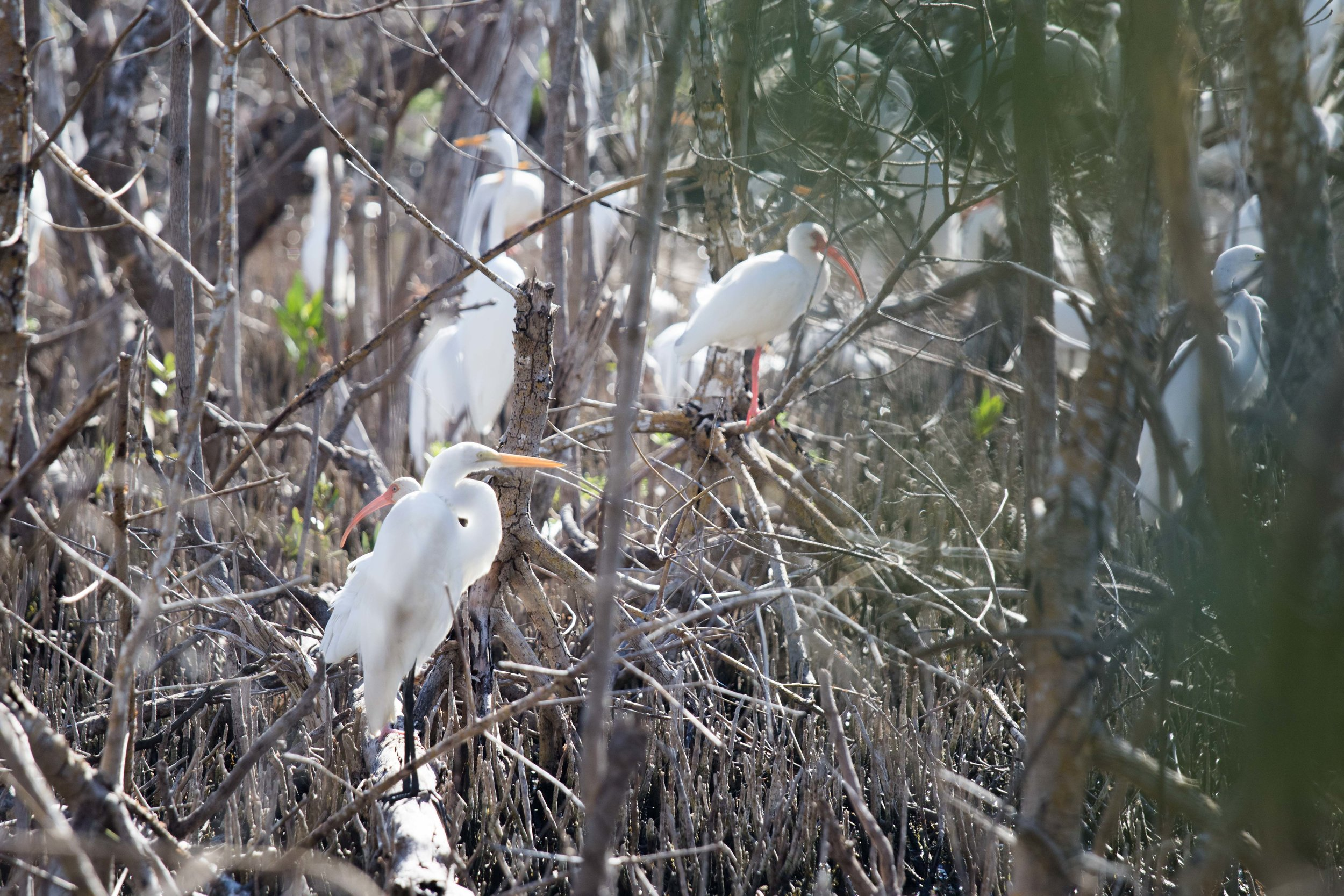 2019_Everglades-114.jpg