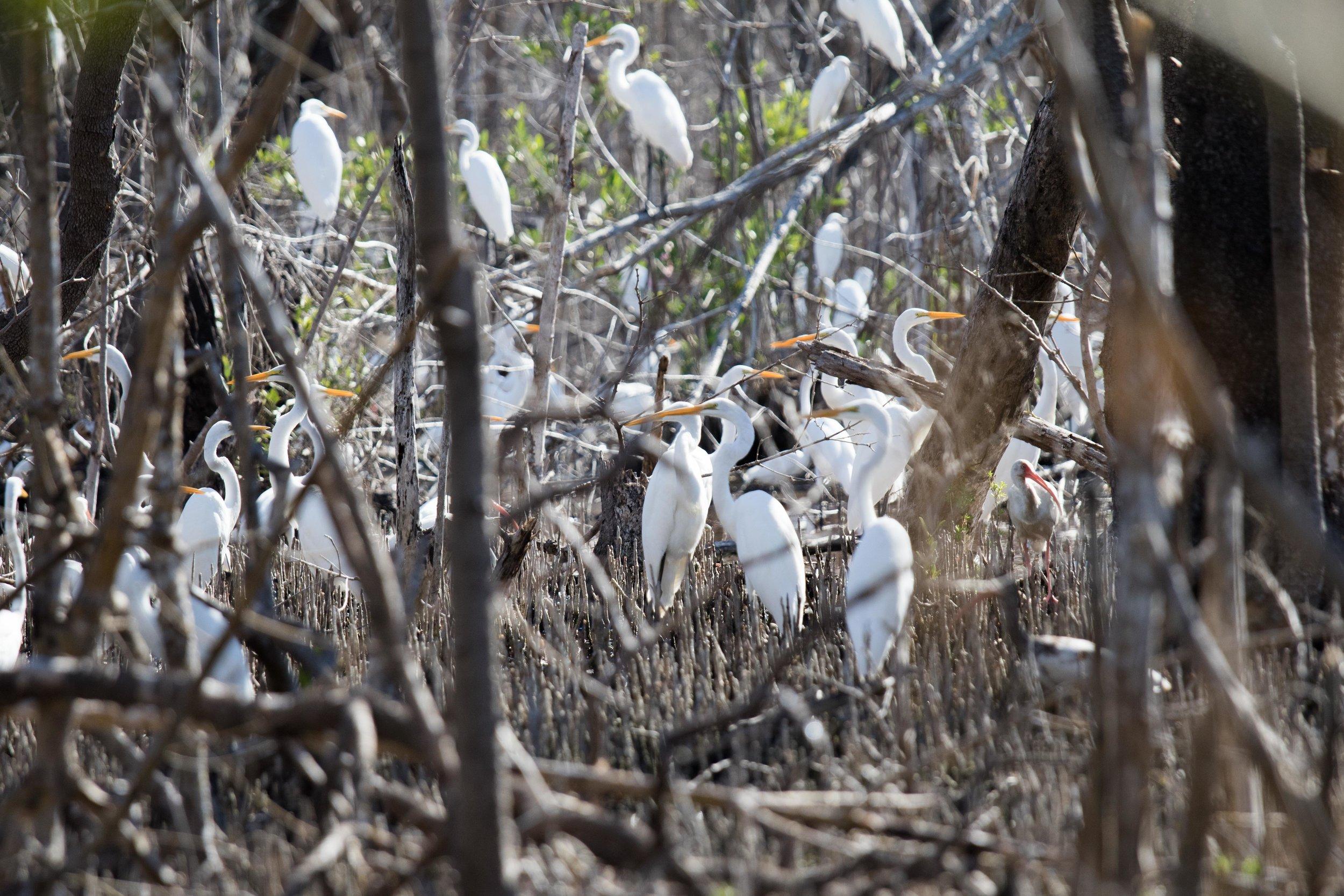 2019_Everglades-117.jpg