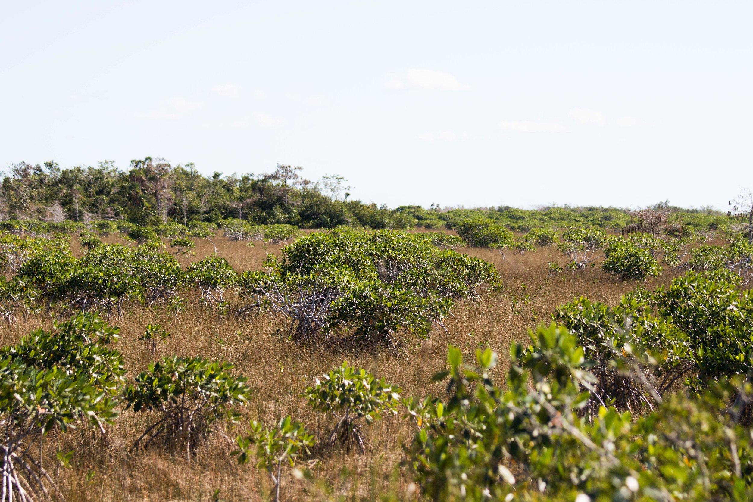 2019_Everglades-120.jpg