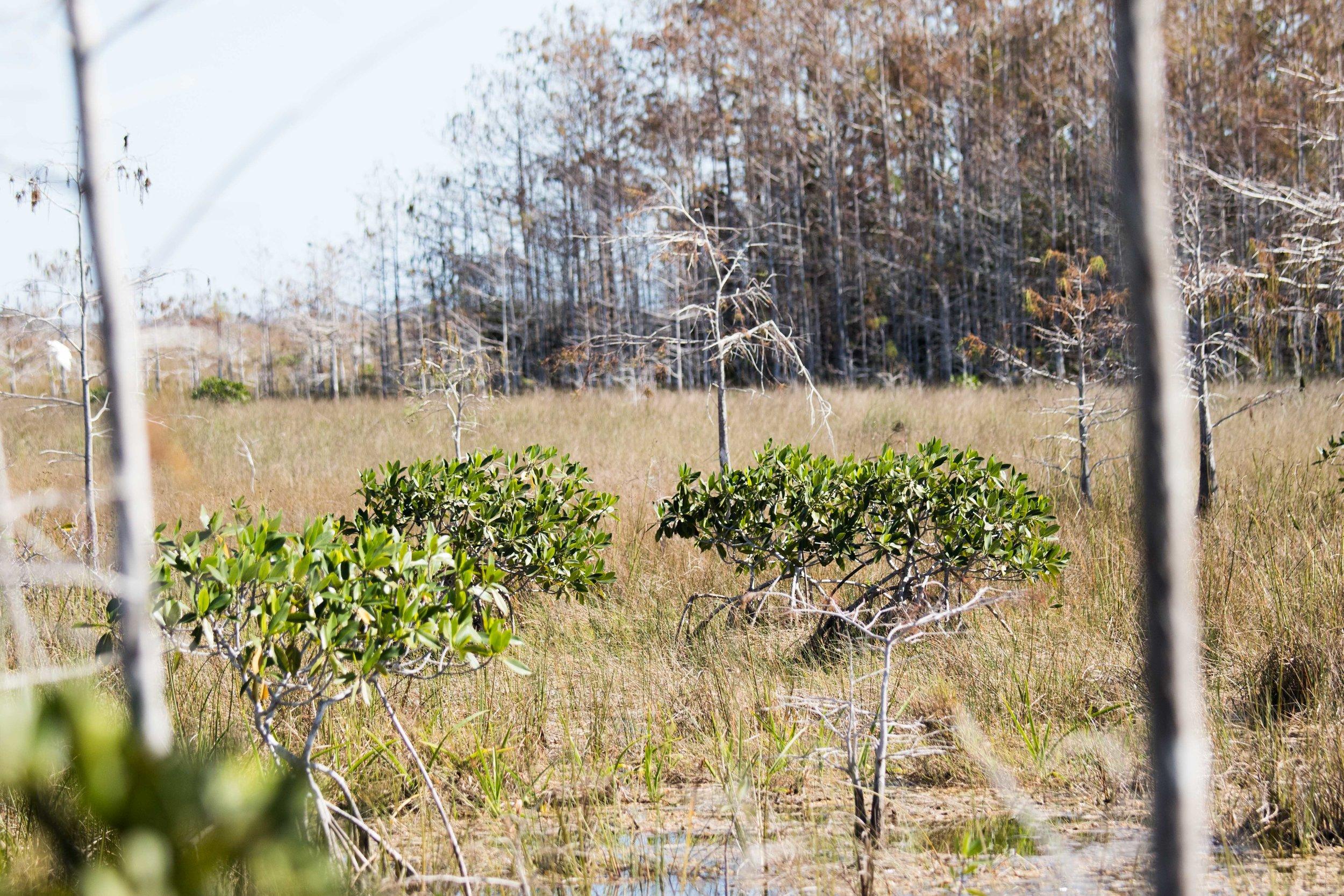 2019_Everglades-122.jpg