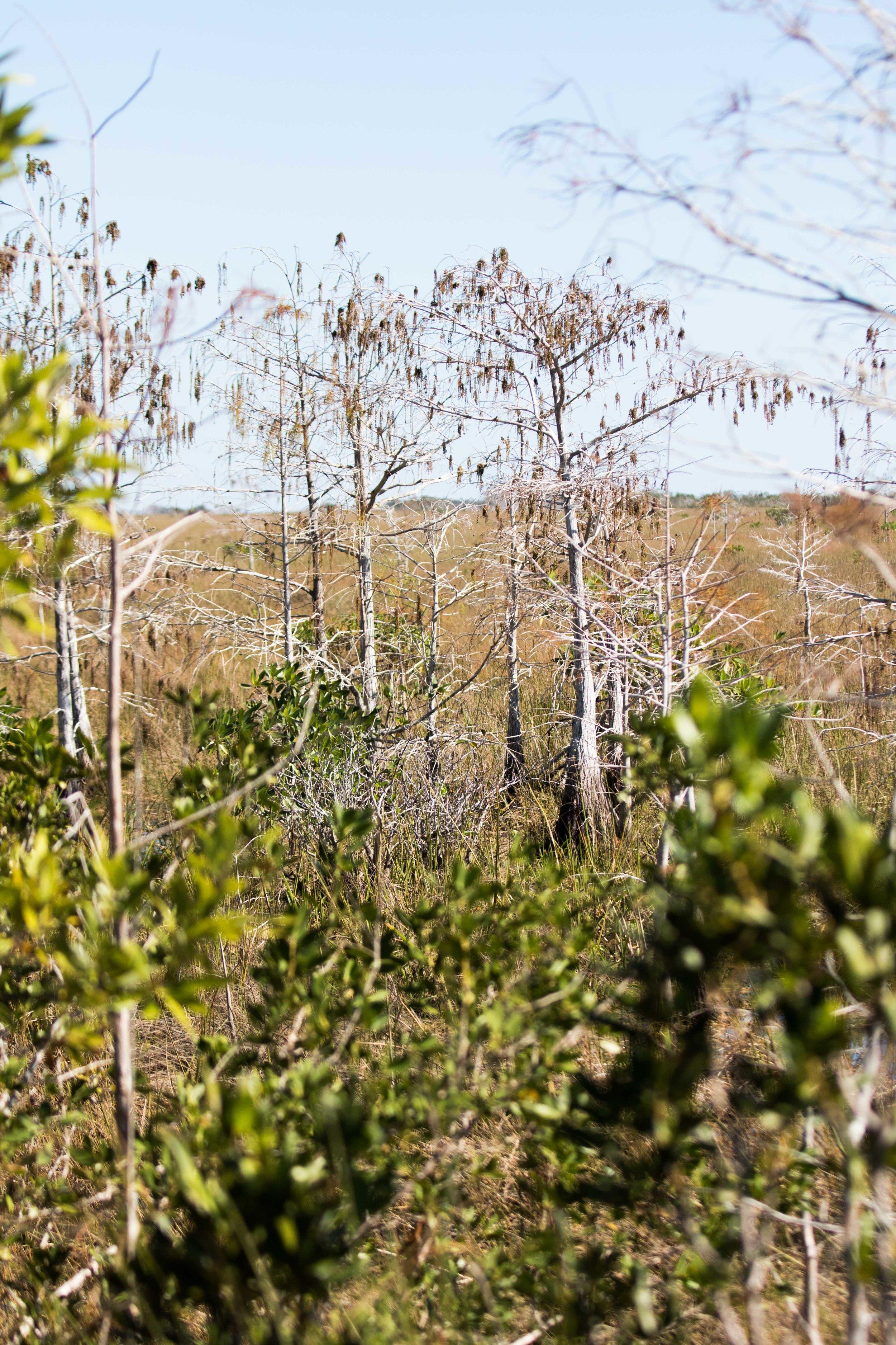 2019_Everglades-123.jpg