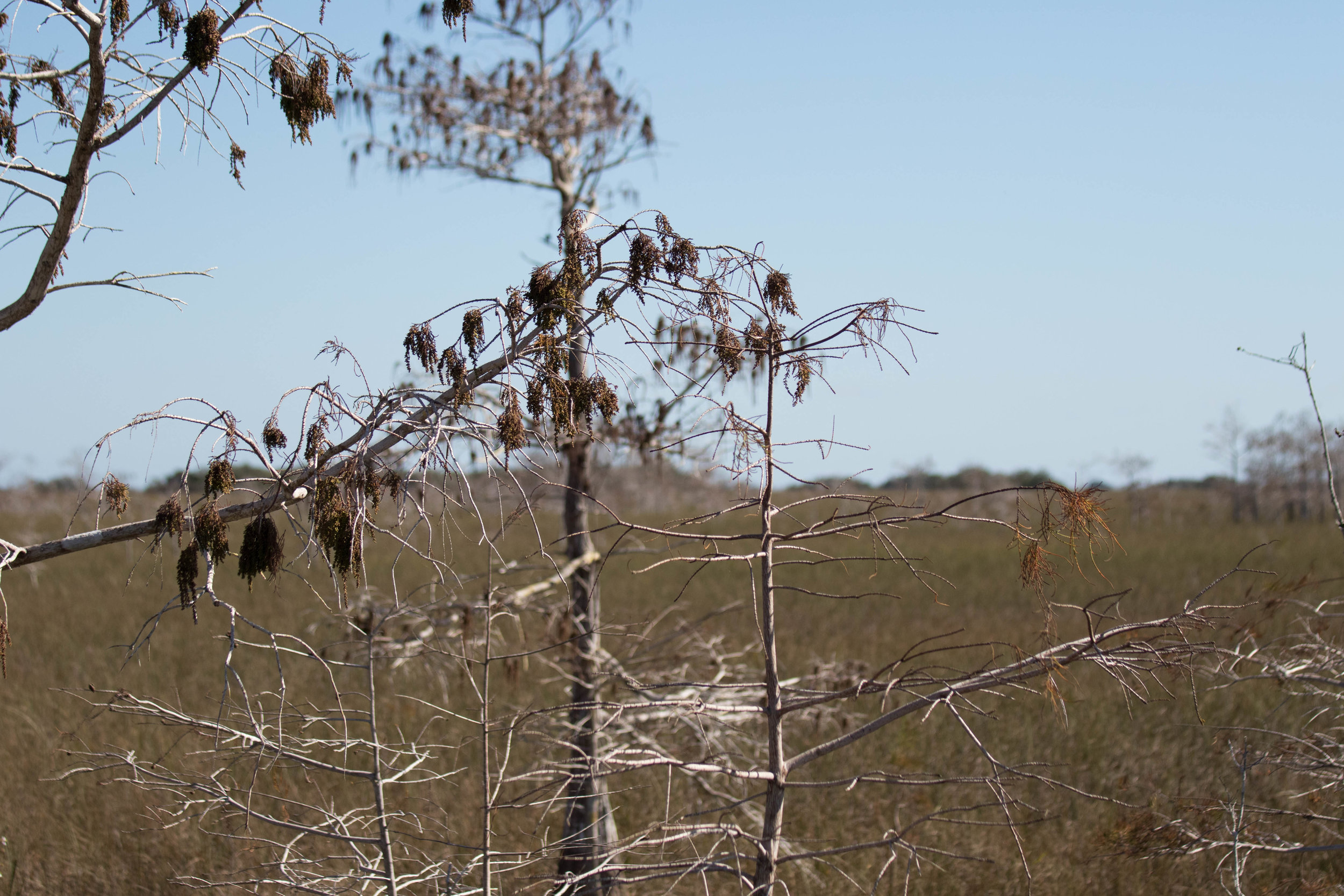 2019_Everglades-126.jpg