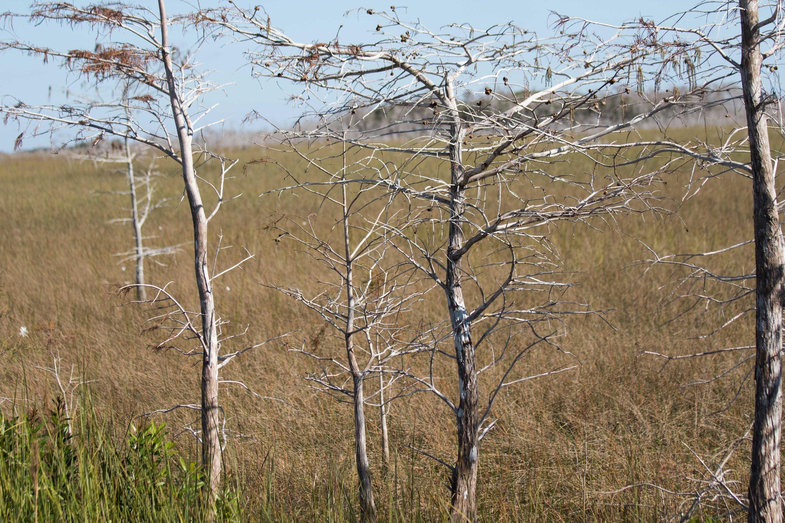 2019_Everglades-127.jpg