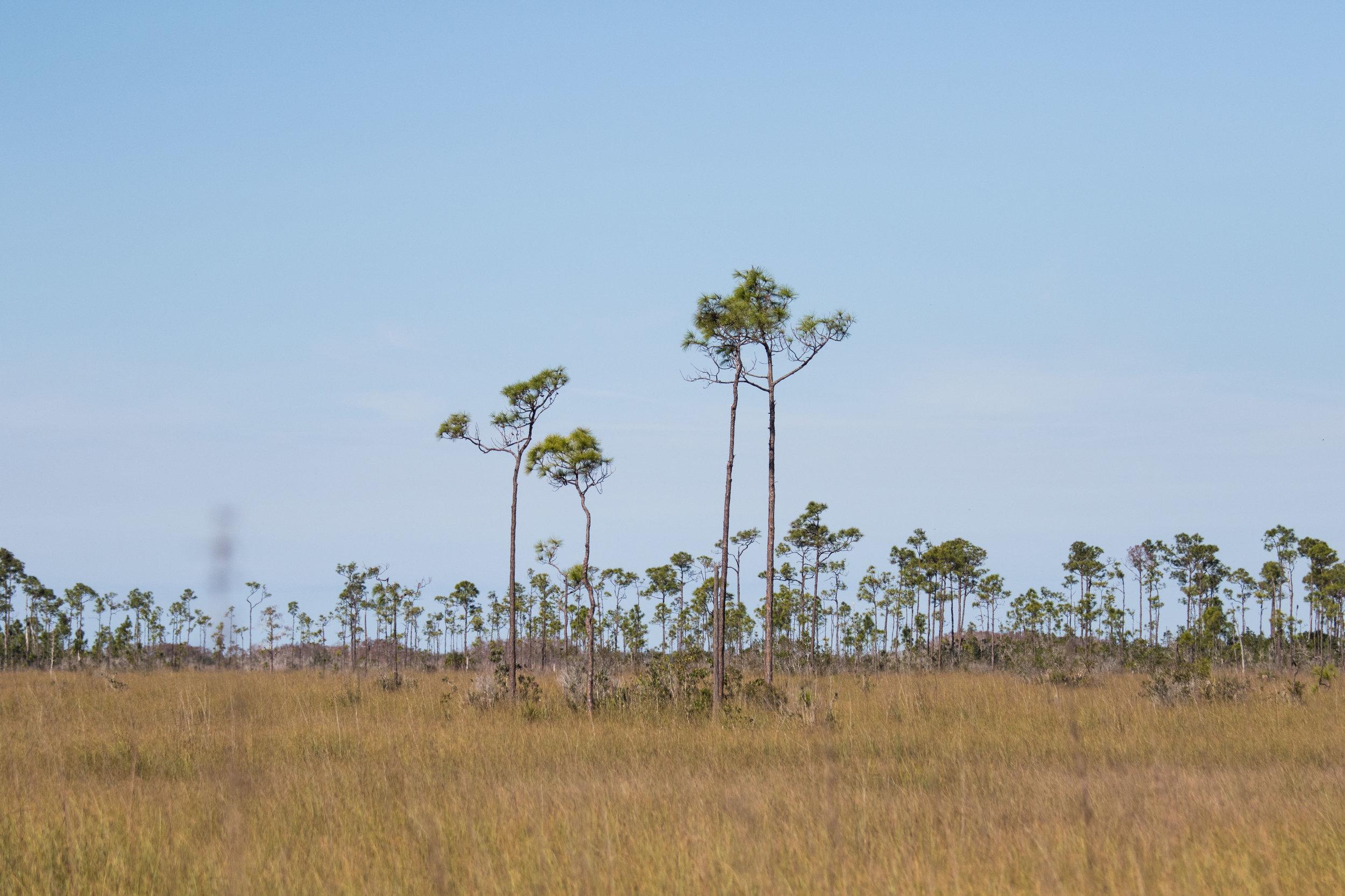 2019_Everglades-129.jpg