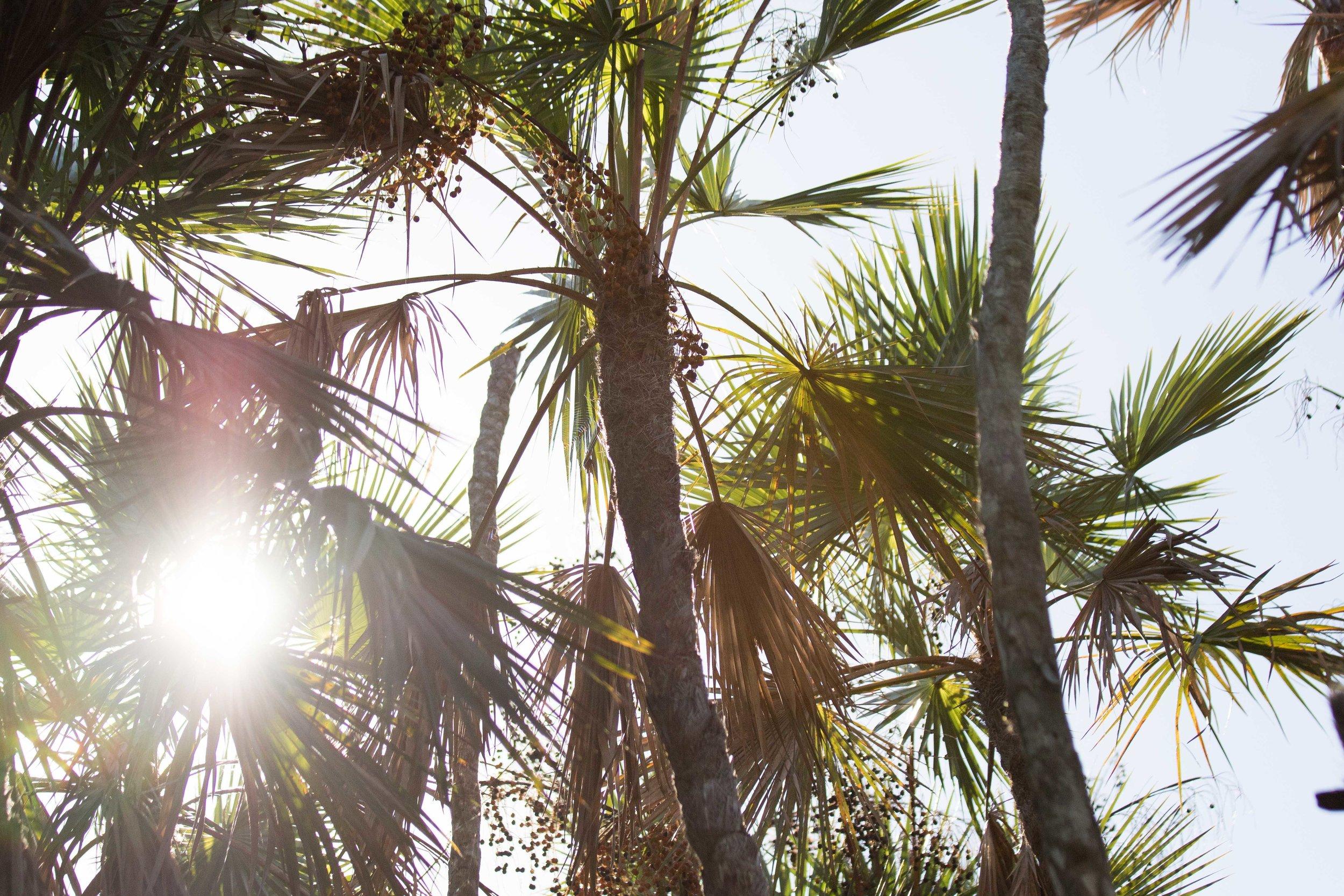 2019_Everglades-155.jpg