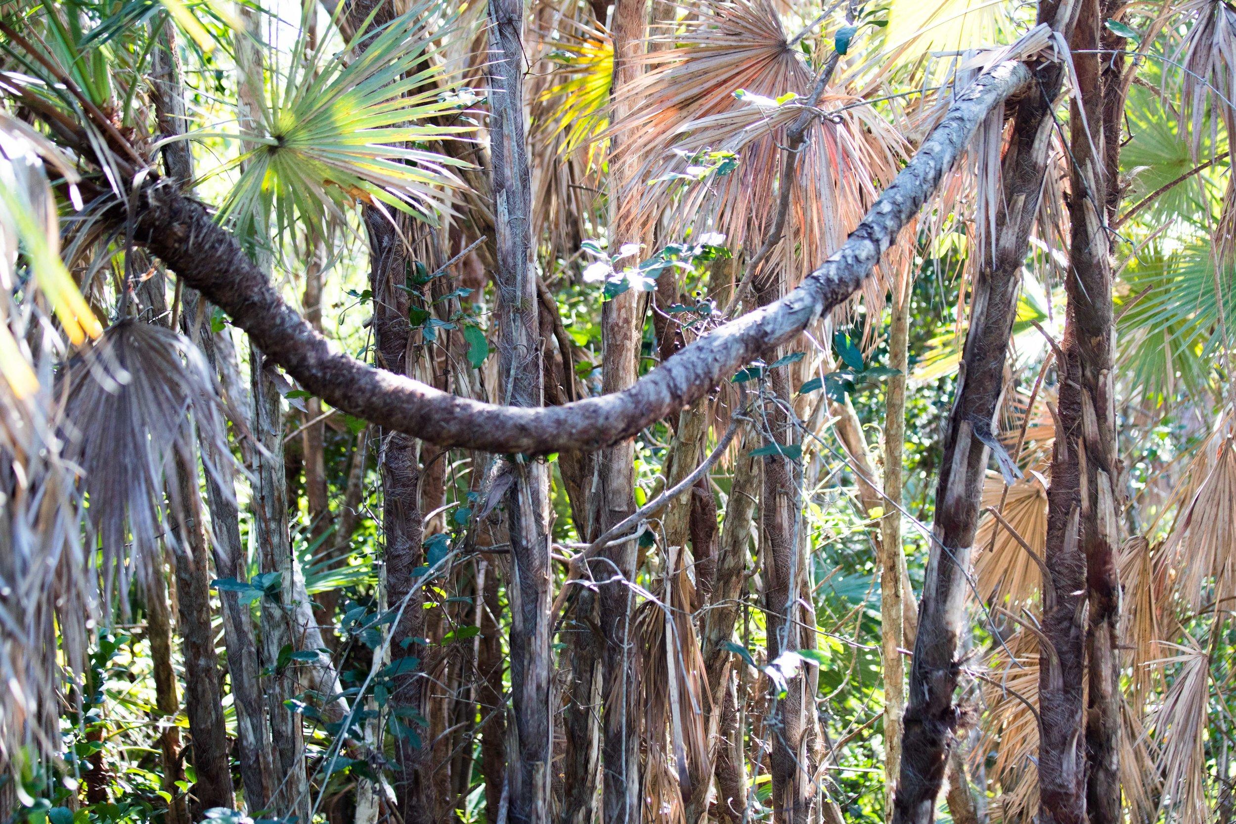 2019_Everglades-156.jpg