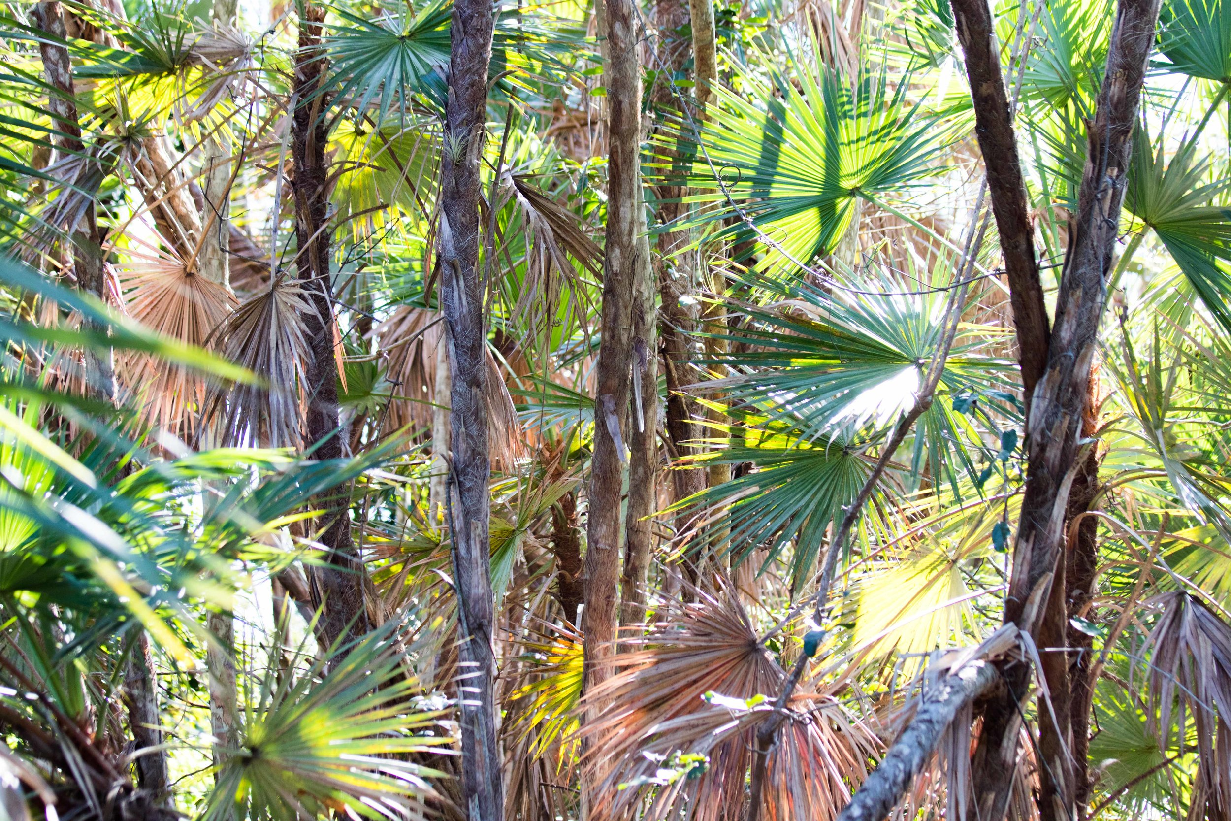 2019_Everglades-157.jpg