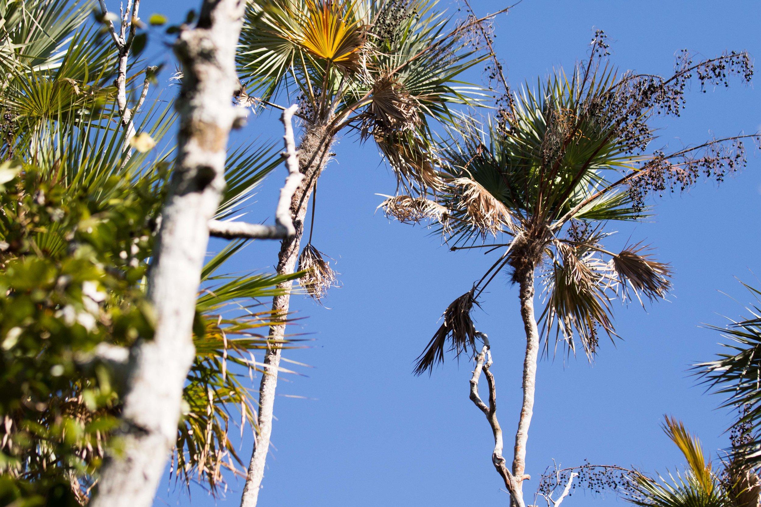 2019_Everglades-167.jpg