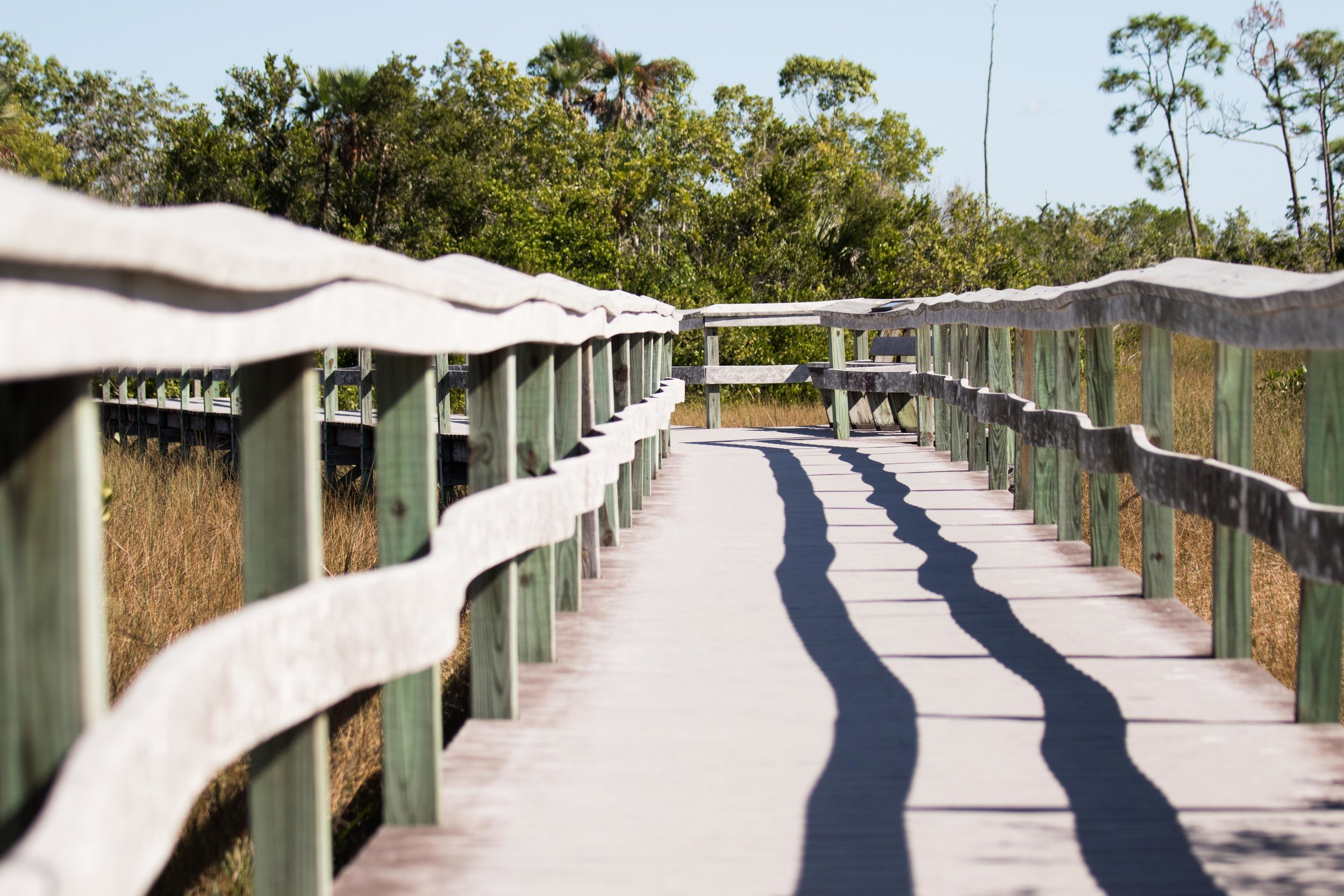 2019_Everglades-168.jpg