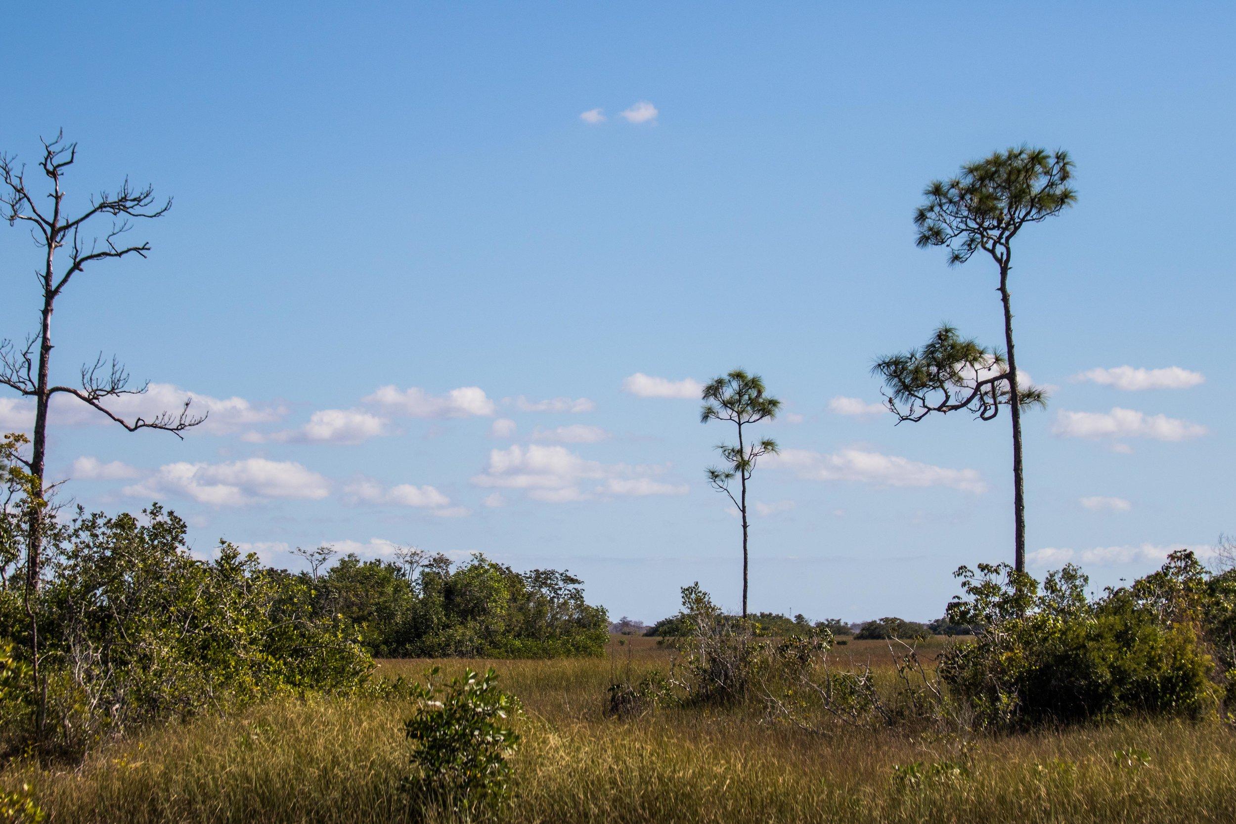 2019_Everglades-184.jpg