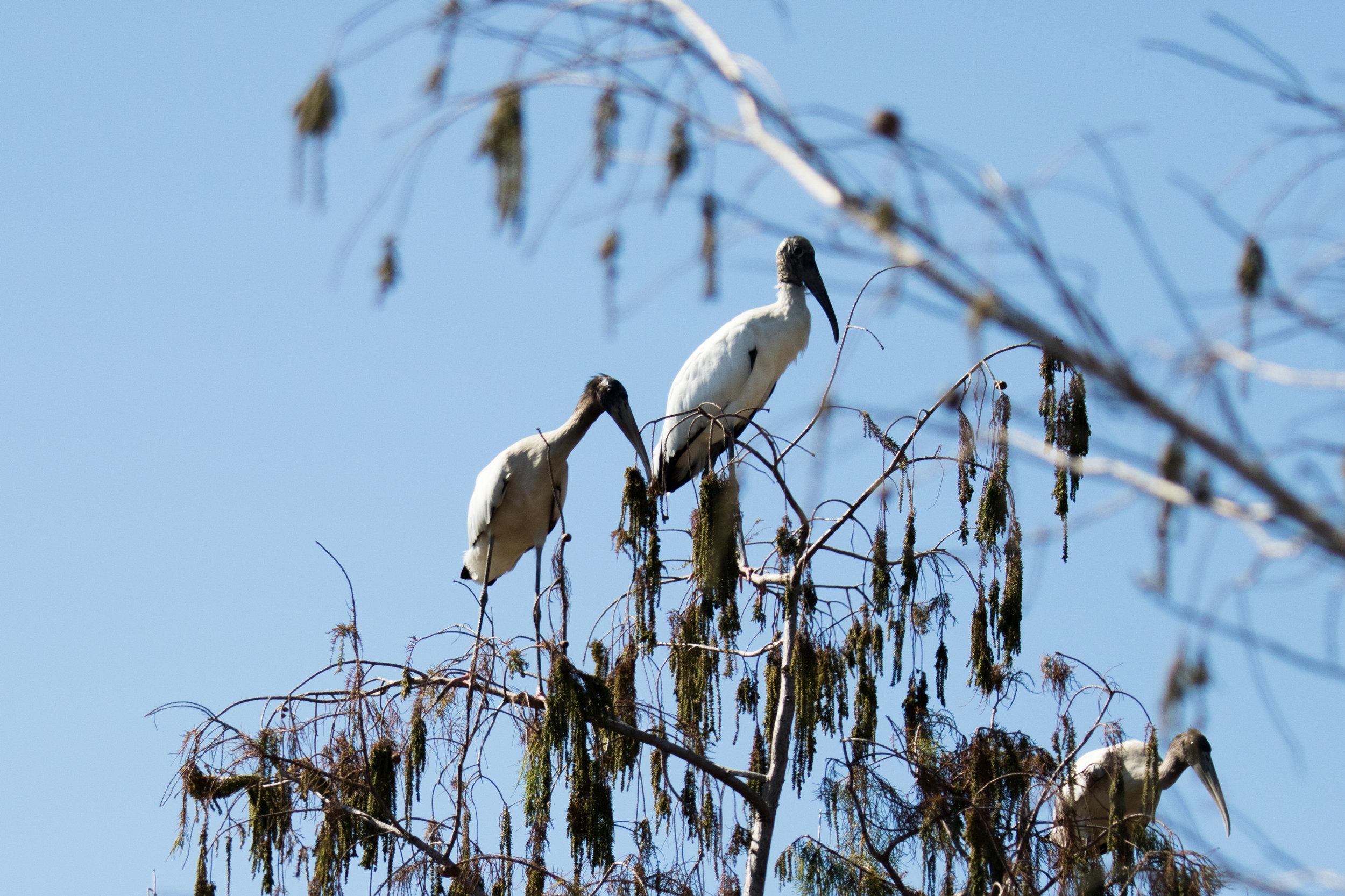 2019_Everglades-200.jpg